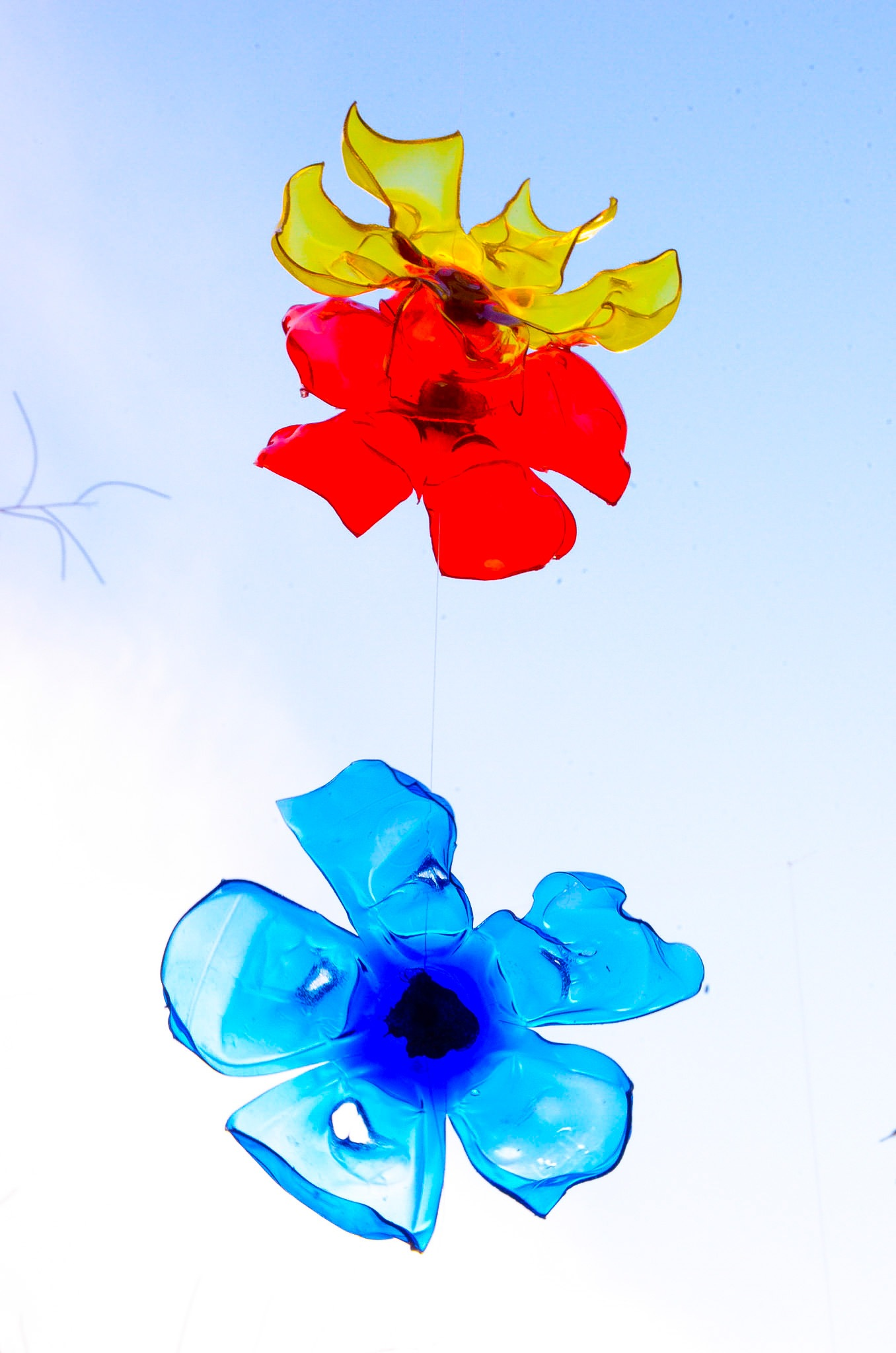 flowers in the sky by Pierina Mariani