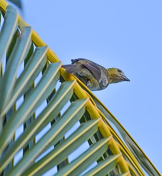 Amazonian bird  by Pierina Mariani