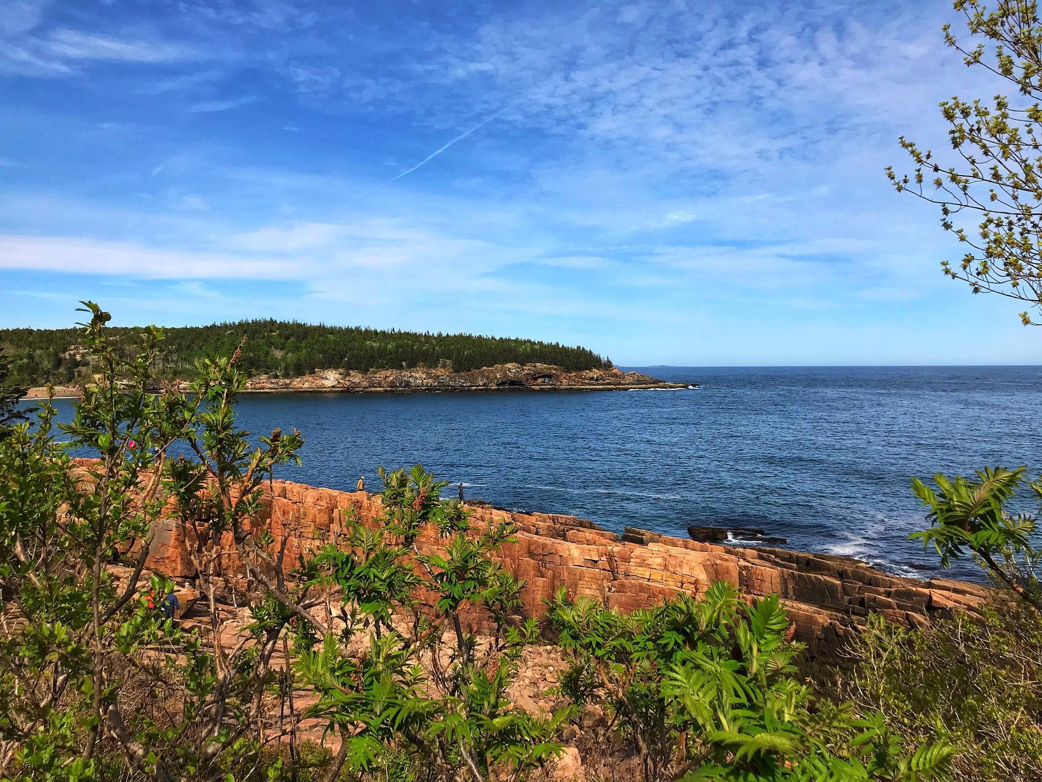 Acadia National Park  by Rashmi Mishra