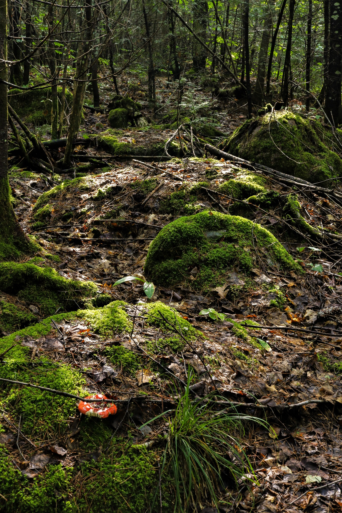 Mossy Rocks  by Eric Fabian