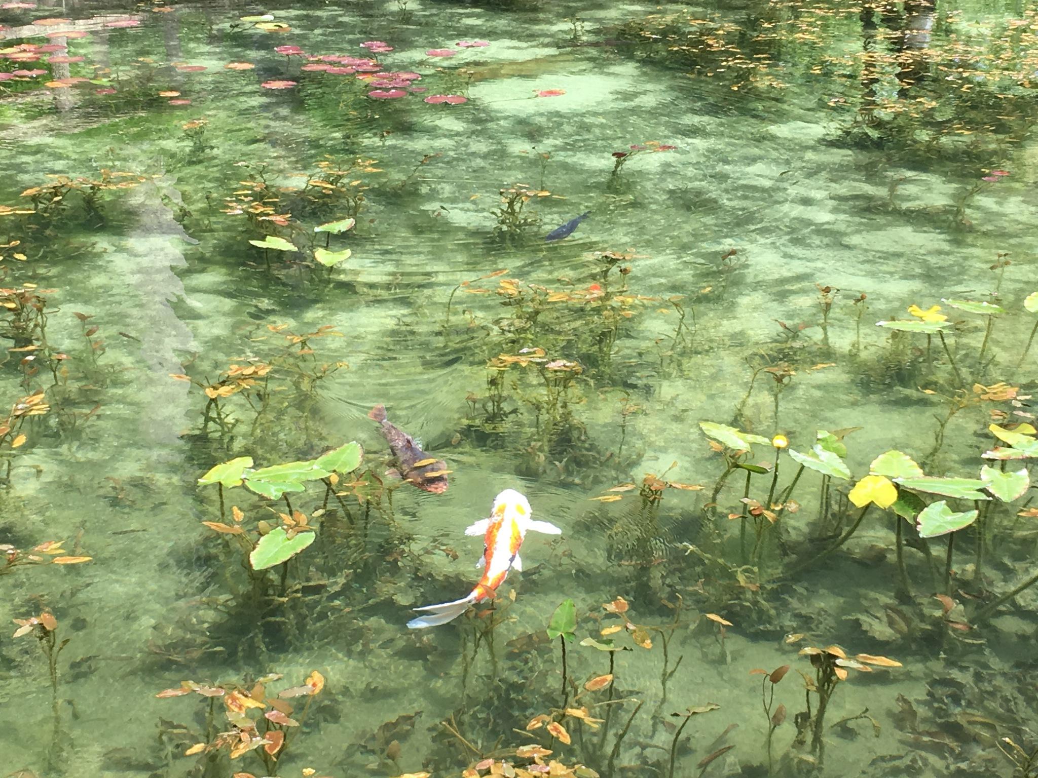 Pond of Monet by Takahirok