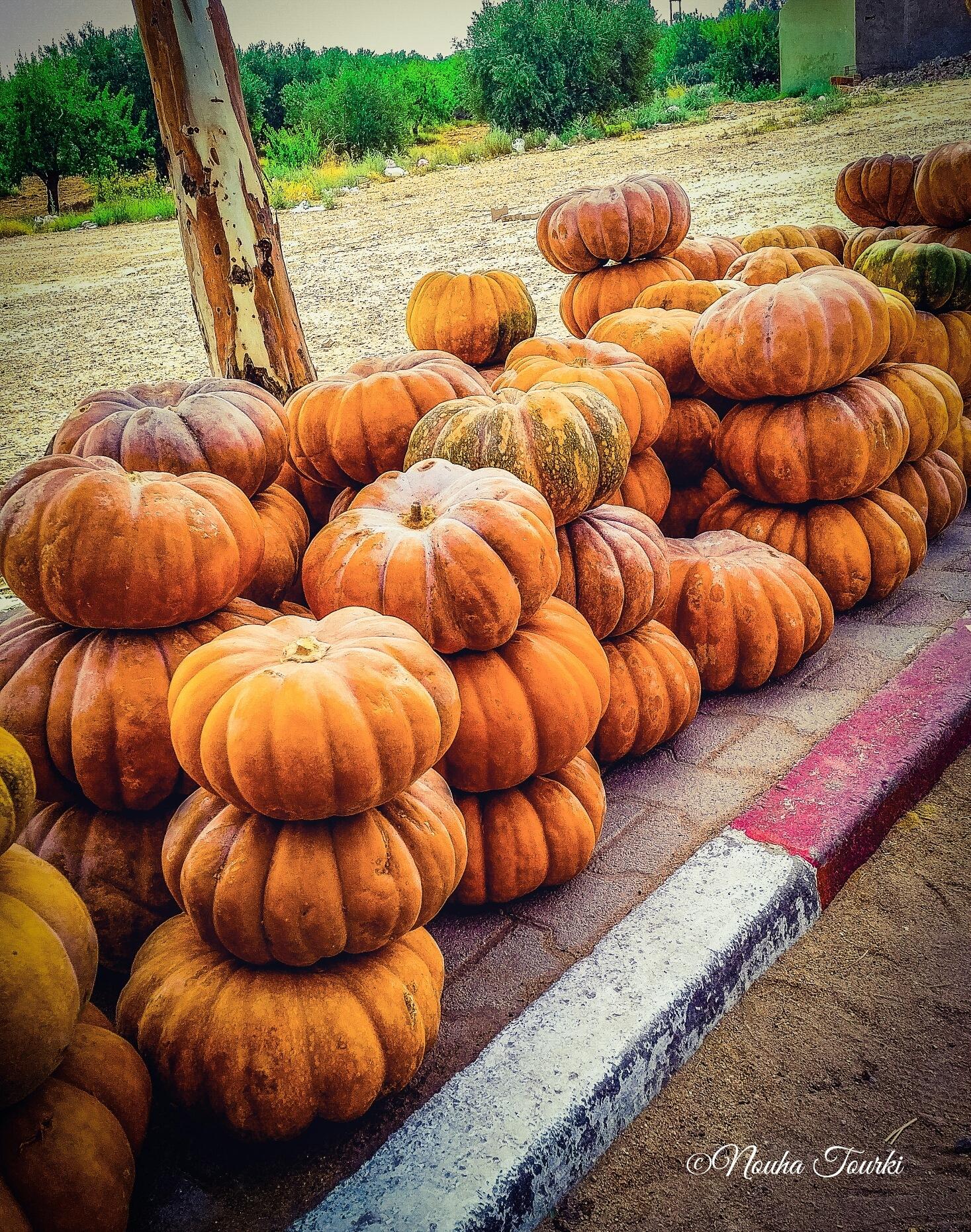 Pumpkin  by Nouha Turki