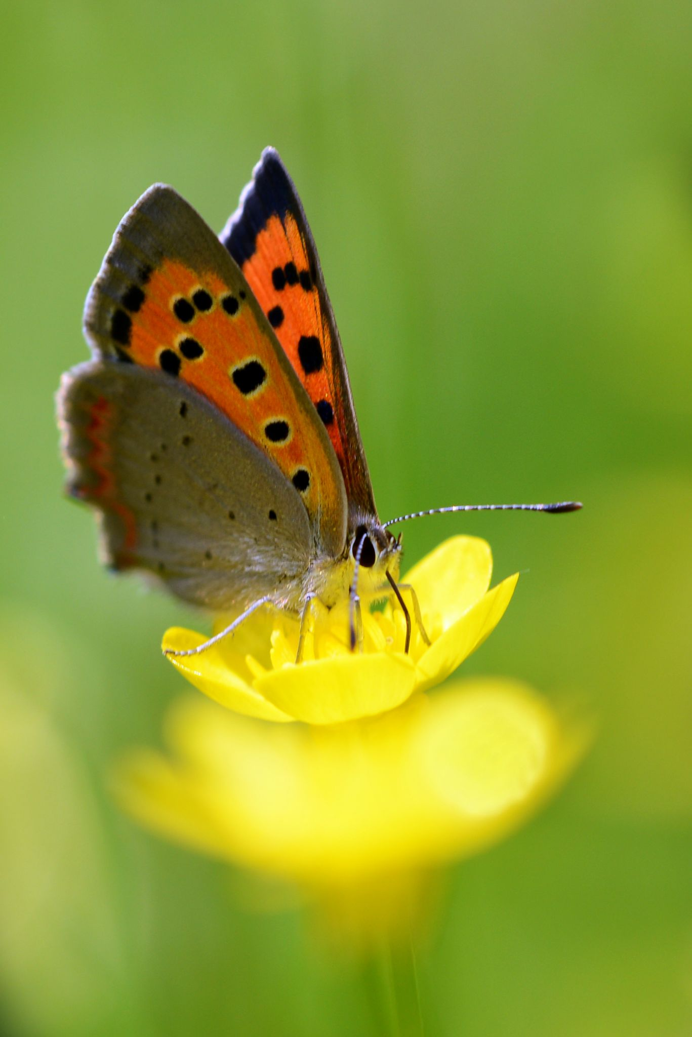 Butterfly... by PLICTY