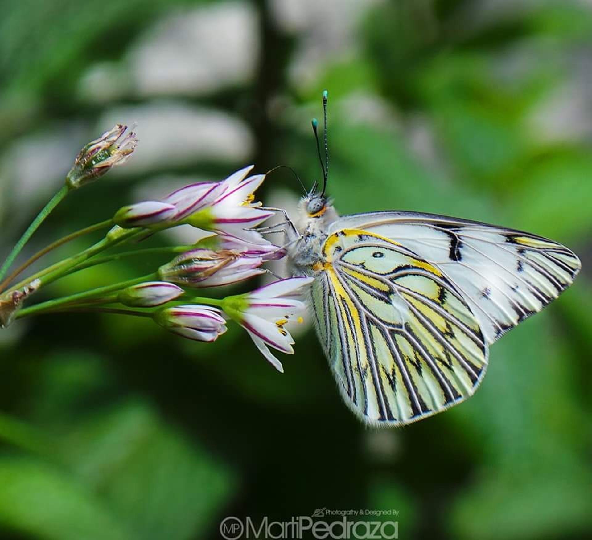 Butterfly by Marta Cristina Pedraza