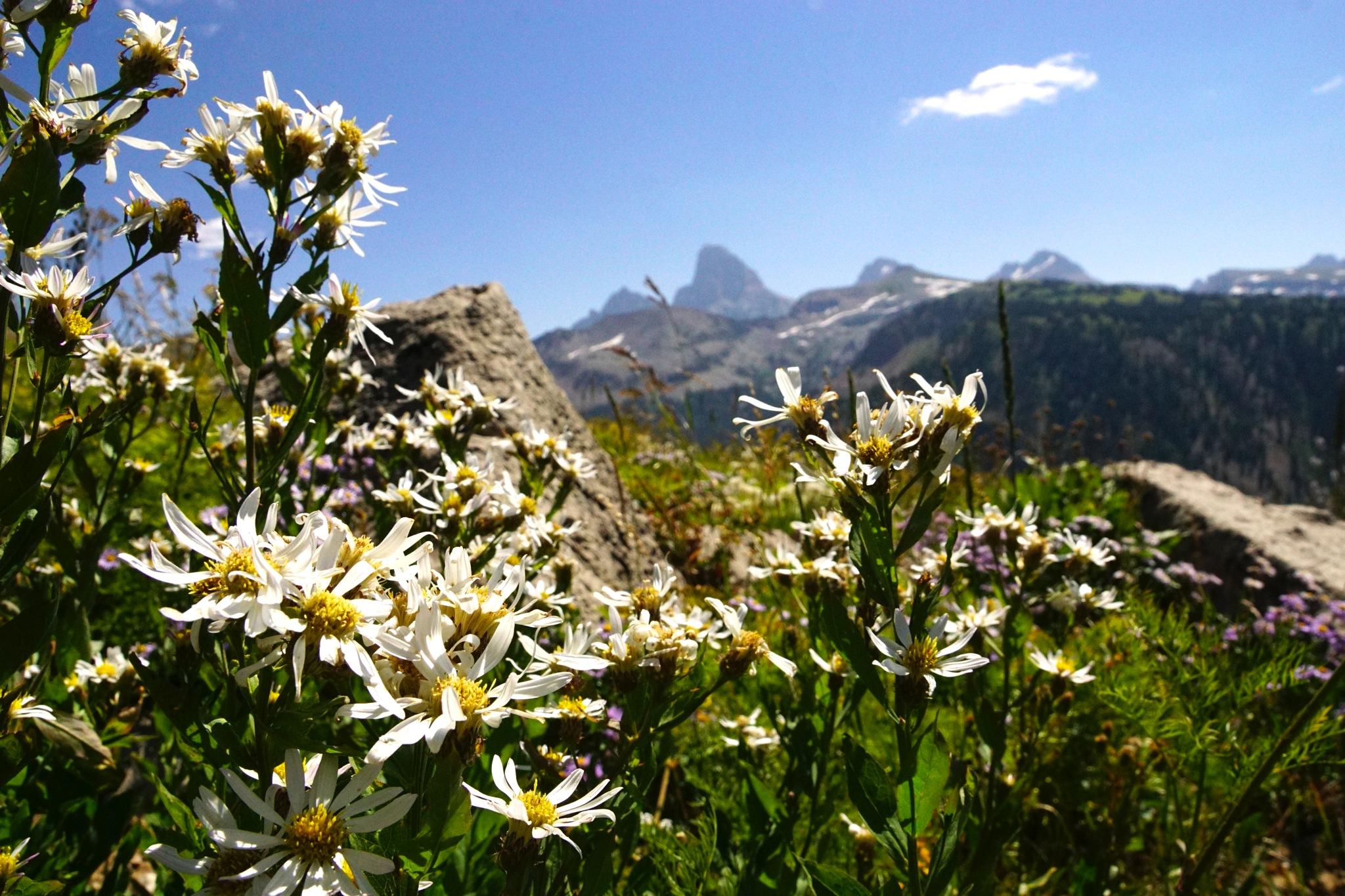 Daisy and the Teton by Joseph Heili