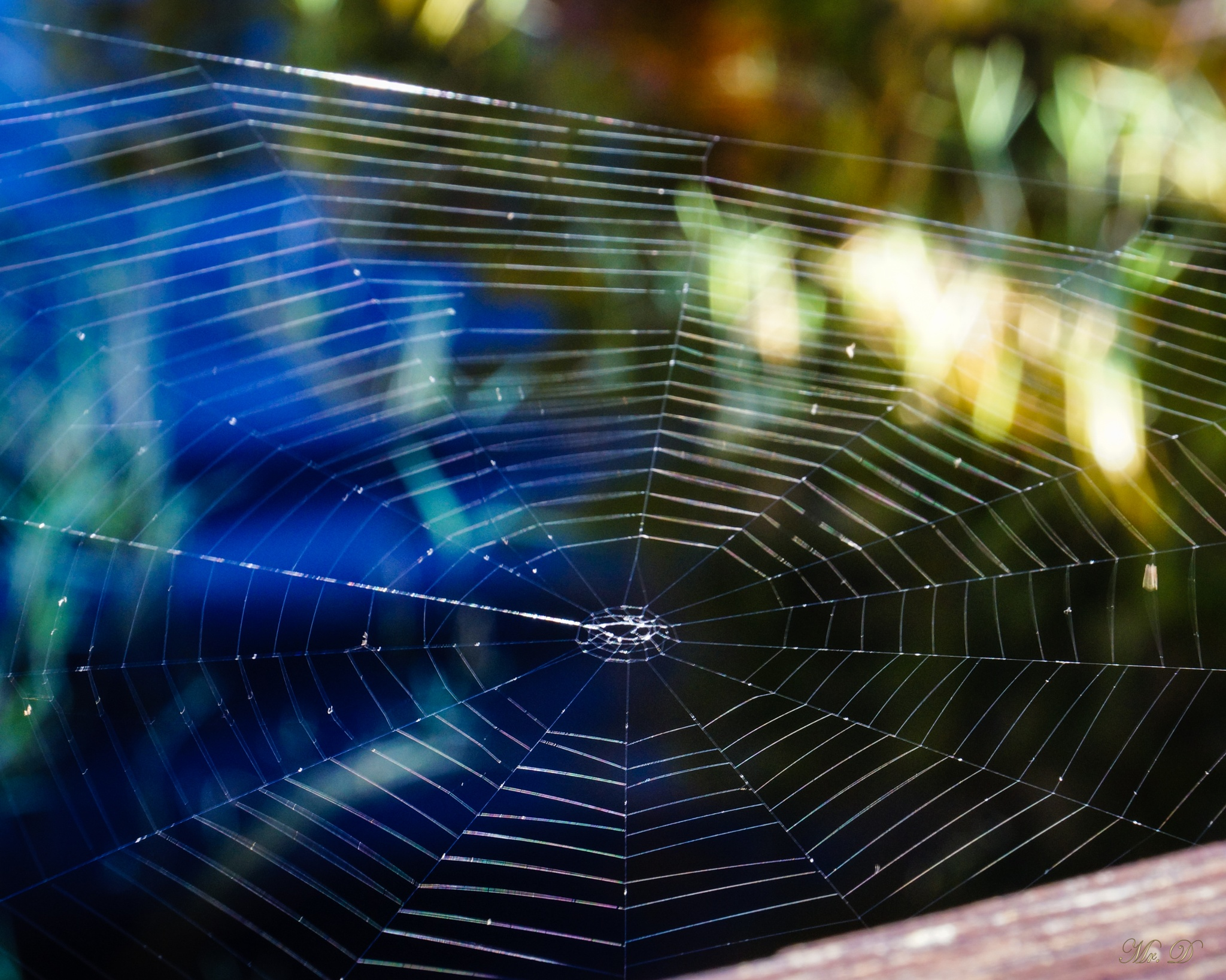 The web we weave by Dale Mr D  Simmons