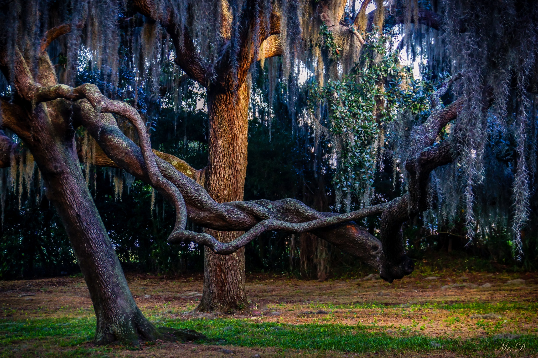 Twisted by Dale Mr D  Simmons