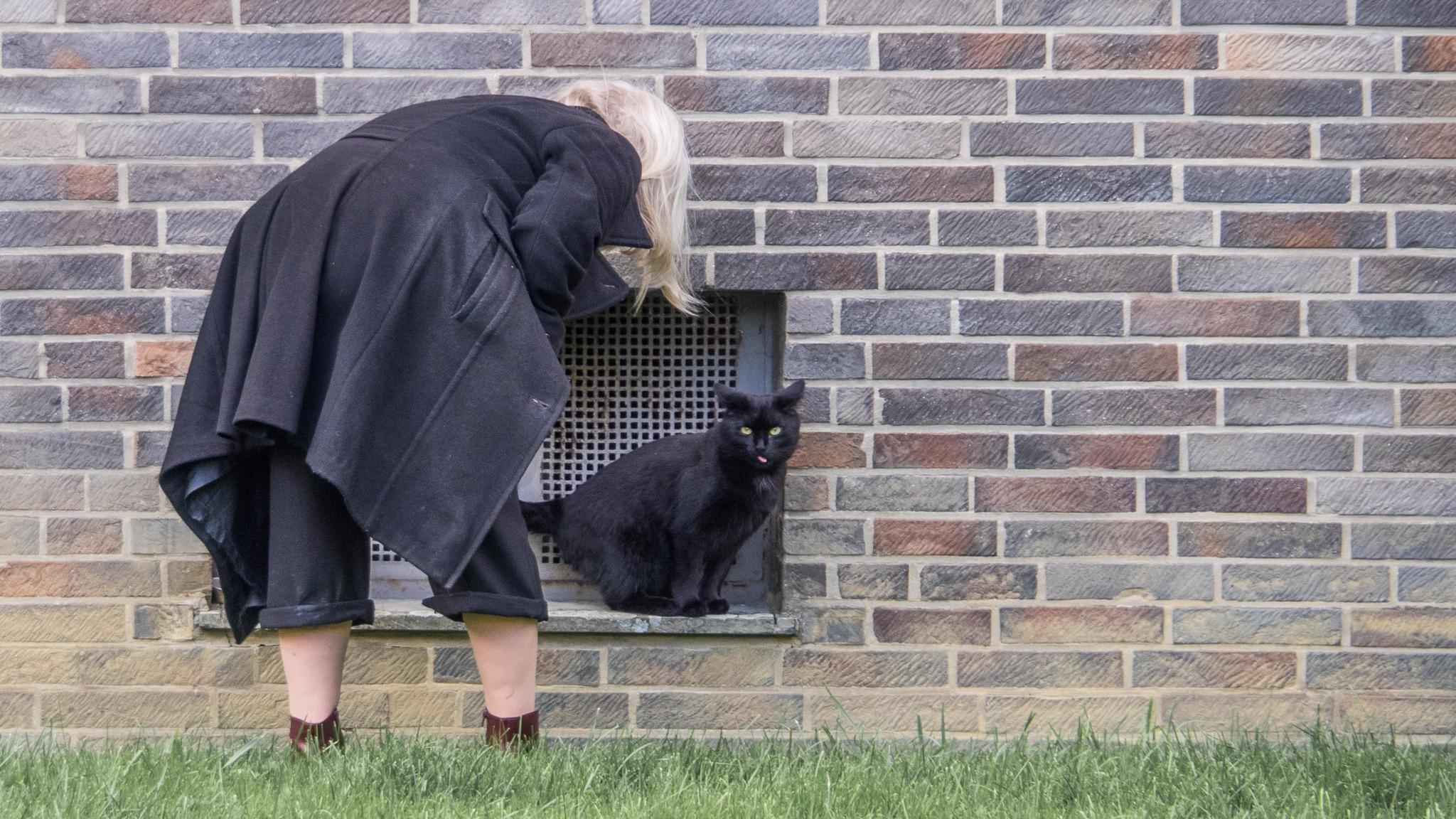 The Cat by JohannesTonn