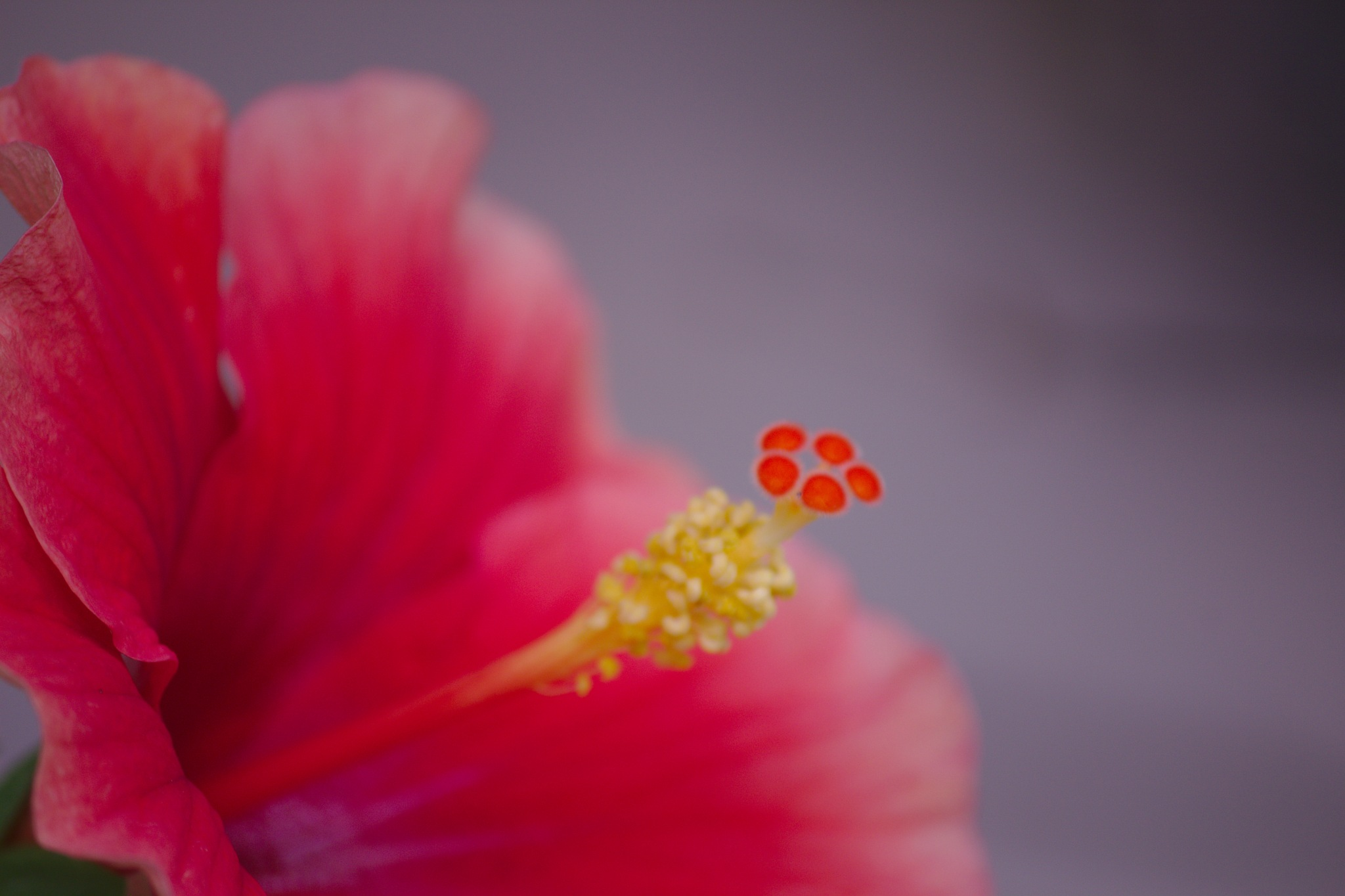 Stigma of a Hibiscus - 5 pods by Guruprasad B. Gopinath