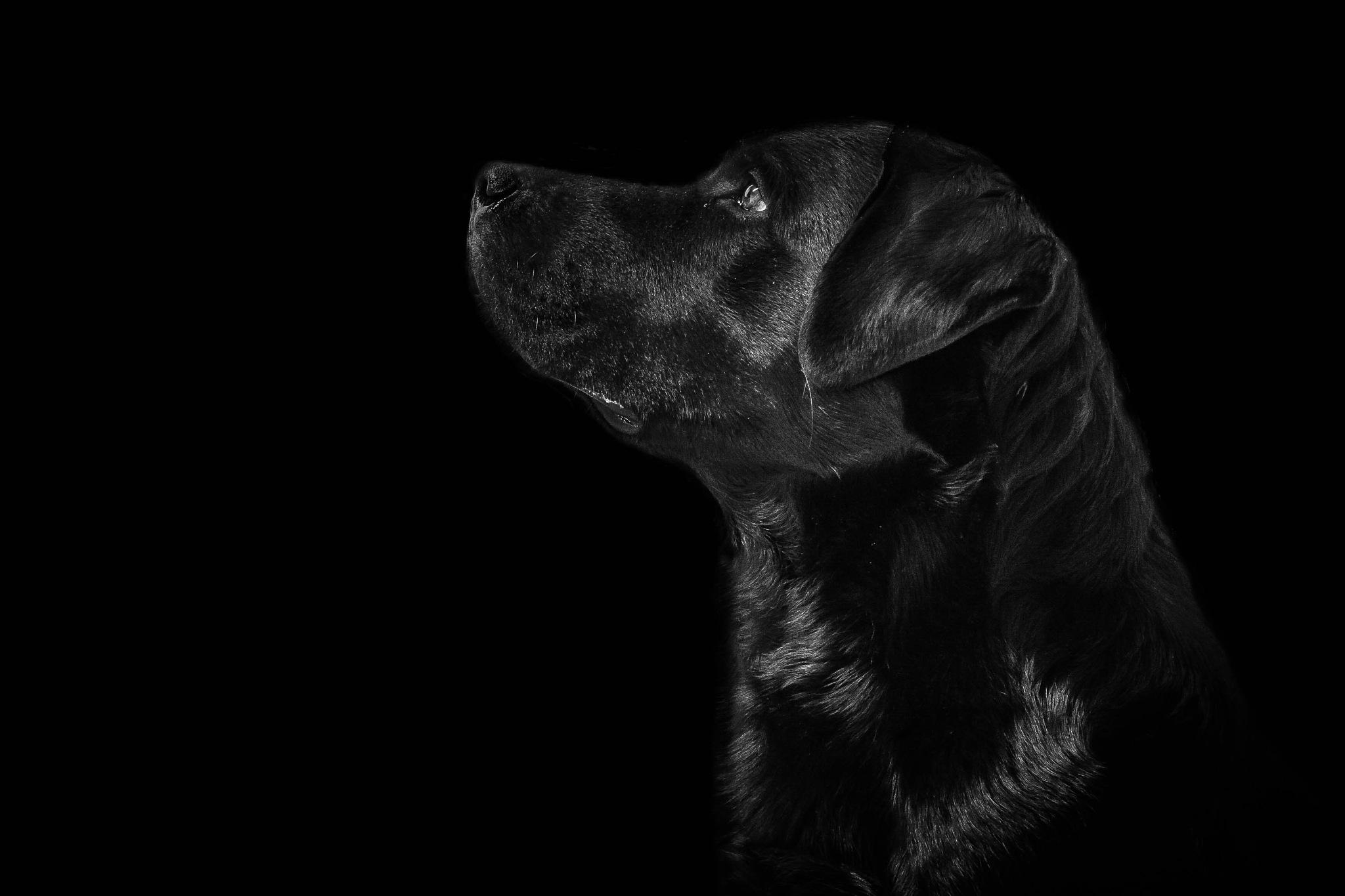 #Dog by VargaBenedek