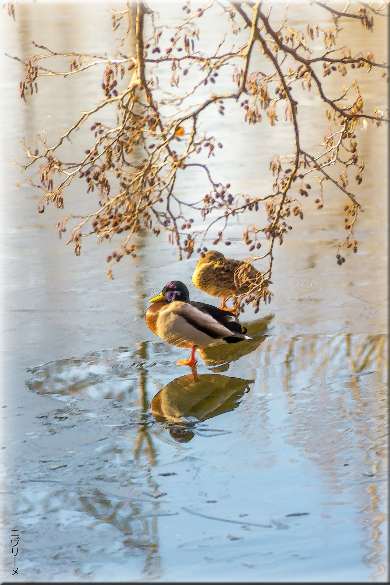 Photo in Fine Art #étang #canards #reflections #branches d'arbre