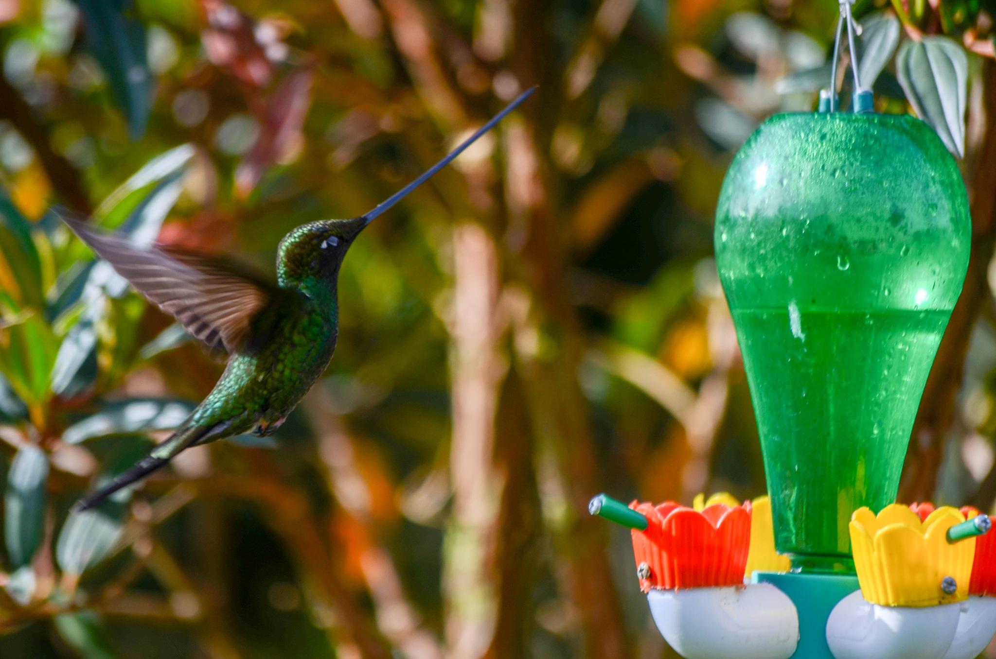 hummingbird  by Jon Saldarriaga