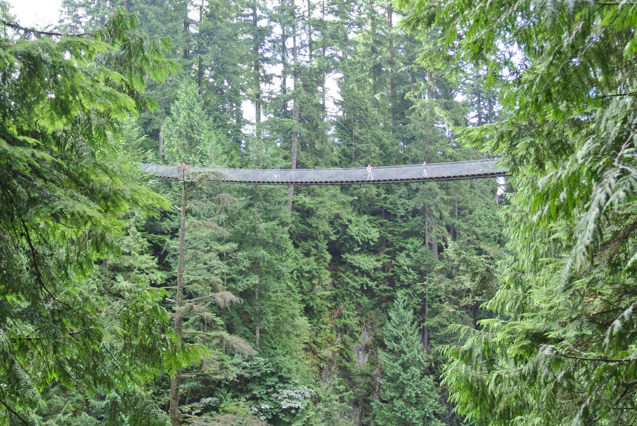 Capilano suspension bridge by Photogenic Studio