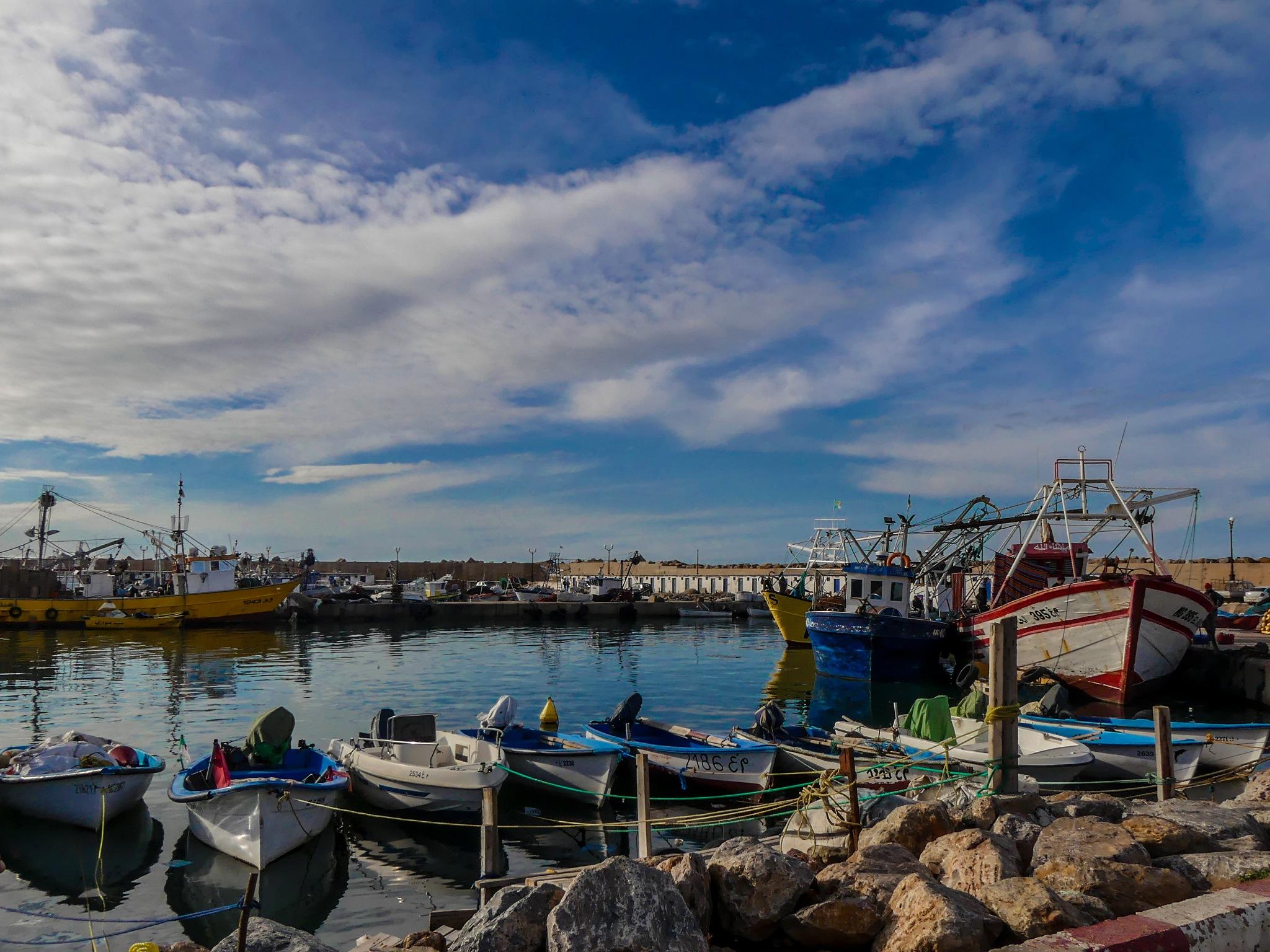 Salamandre, Port  by DjiLa-Pic