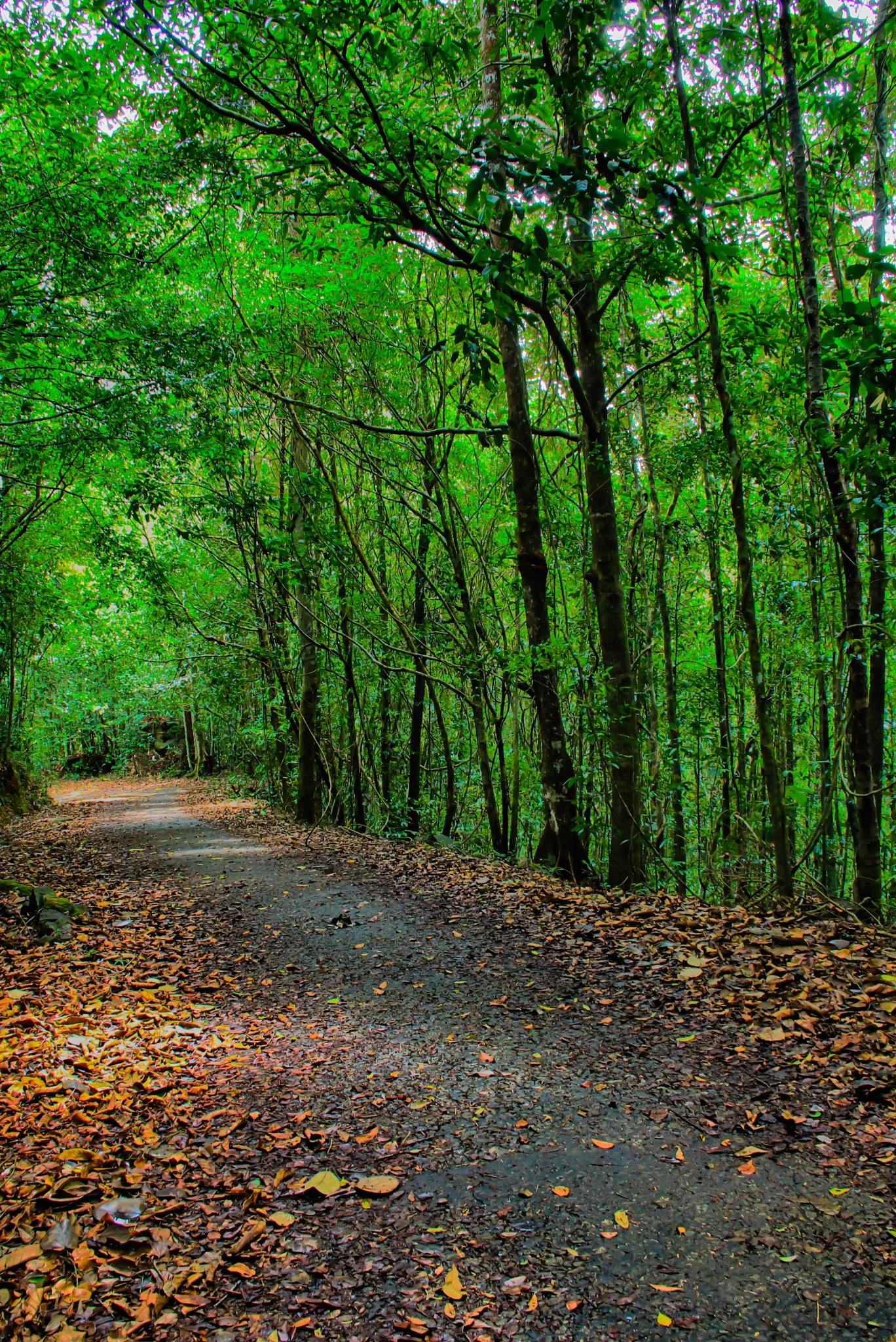 Green Road  by Vihanga Withanage