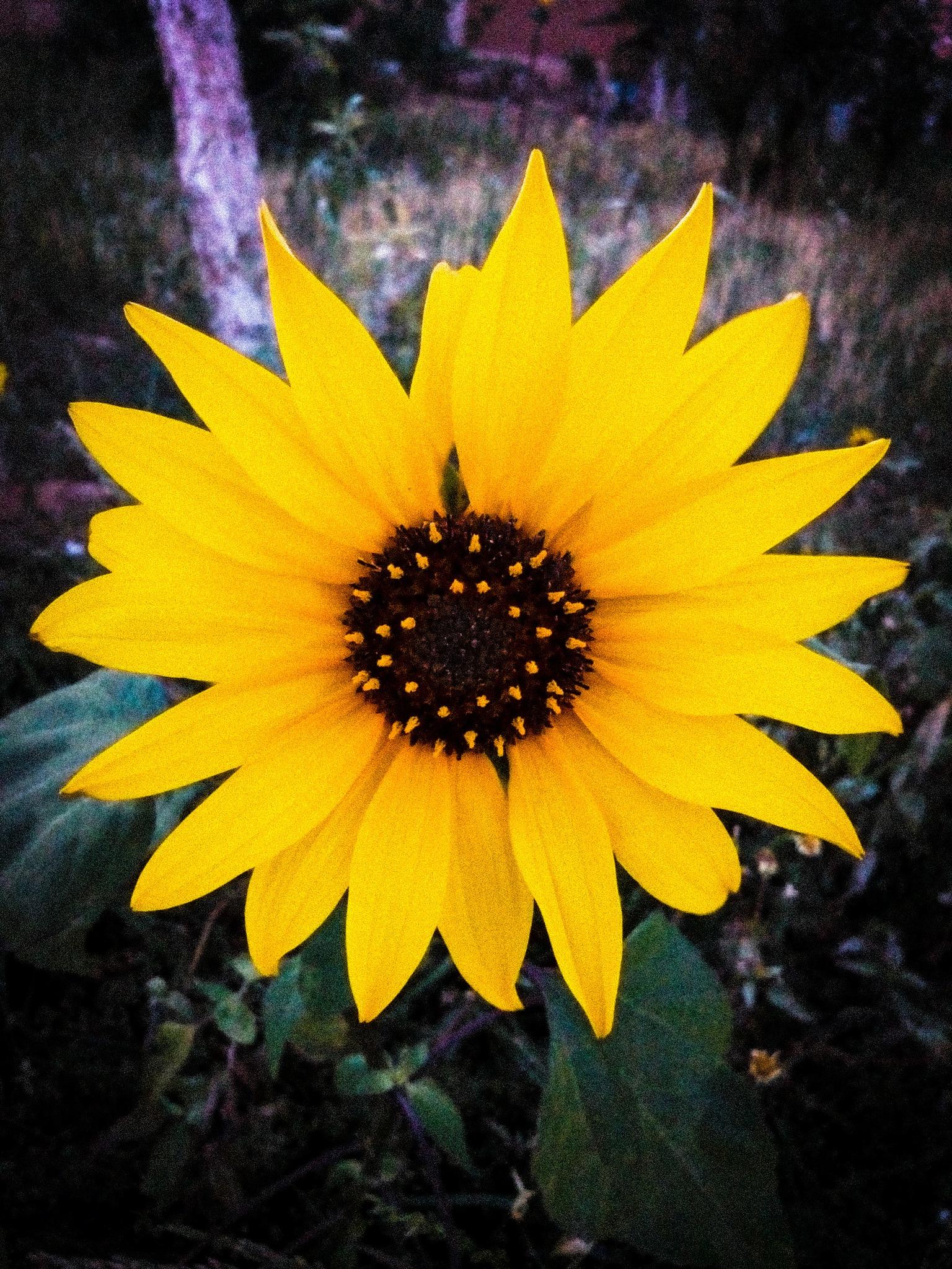 Yellow by Ulf Kpr