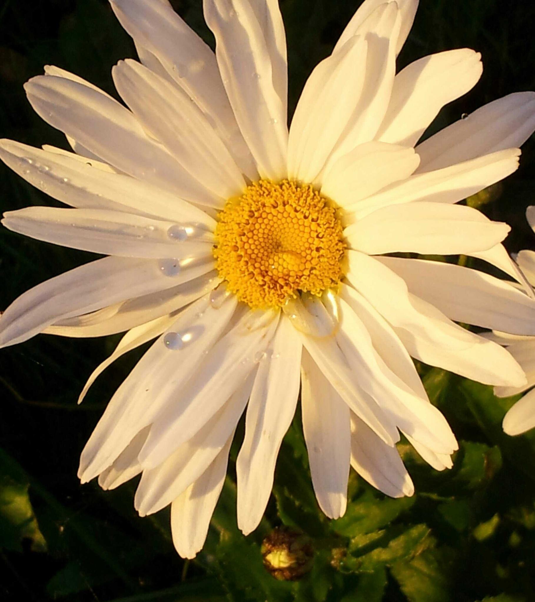 I like to photography flowers! ☺ by Monica