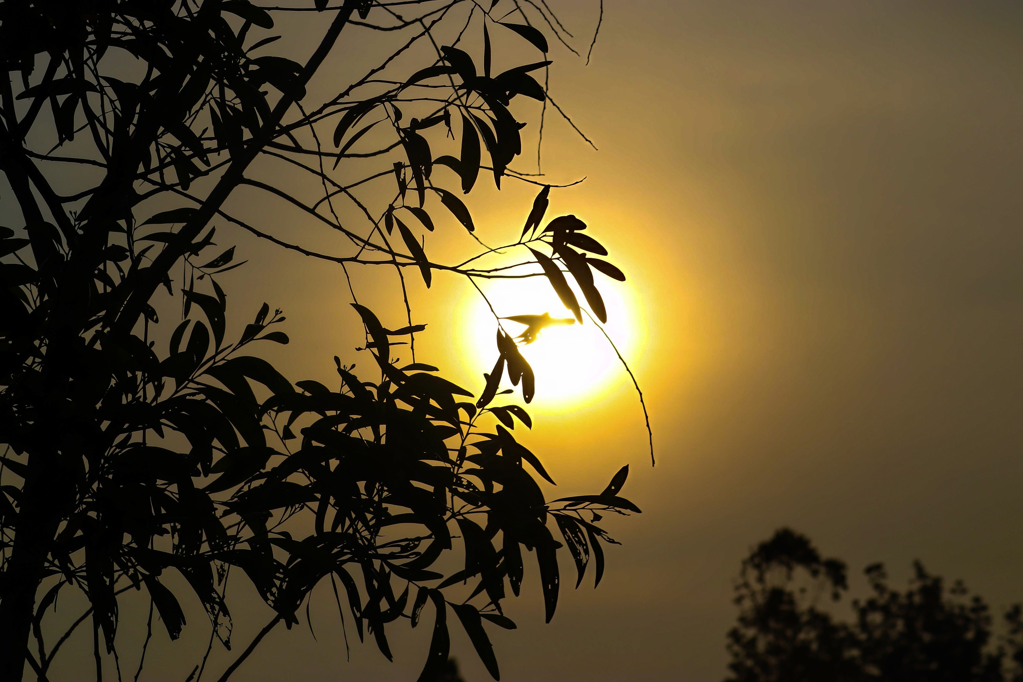 Sunset by Adarsh Prasad