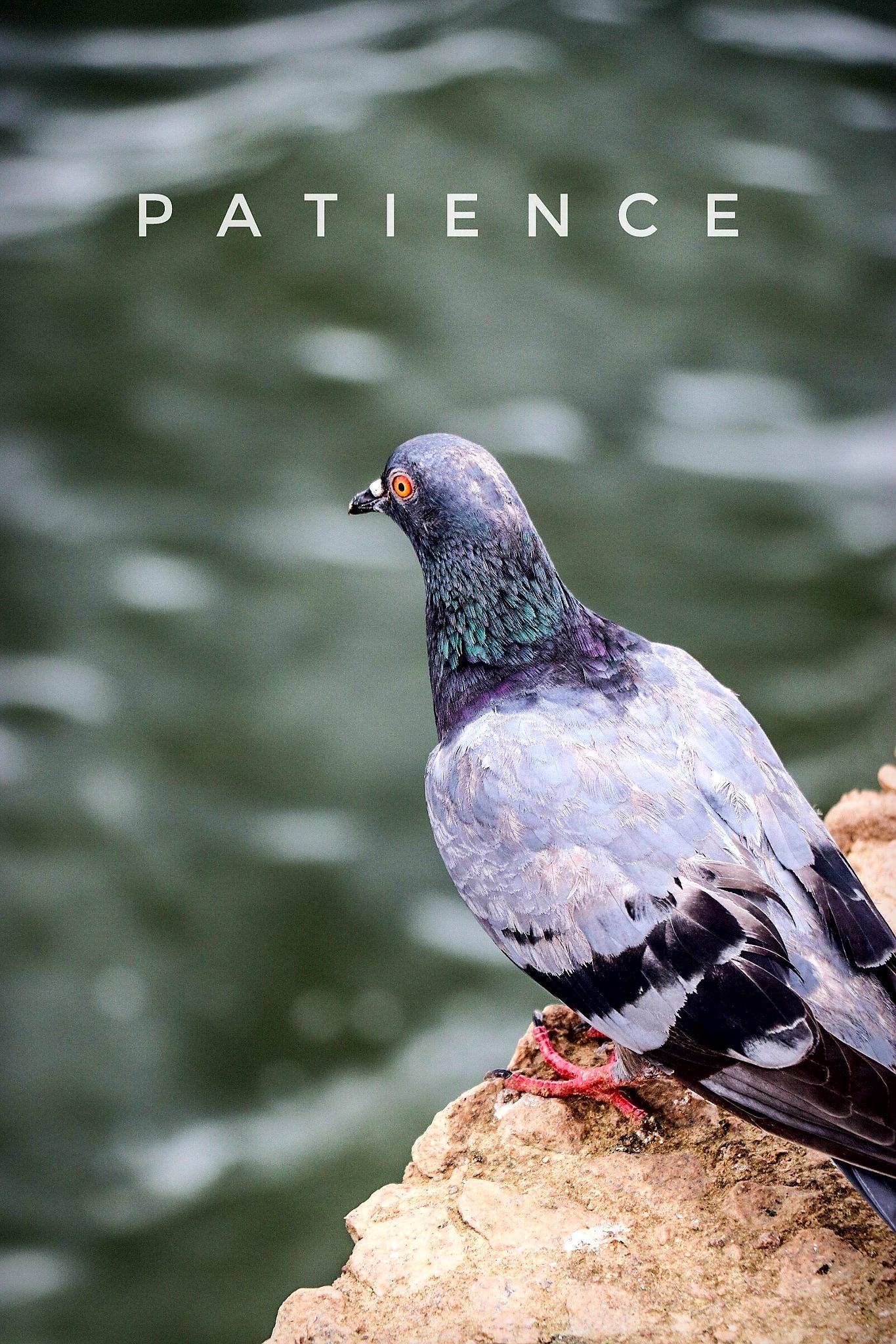 Patience by Adarsh Prasad