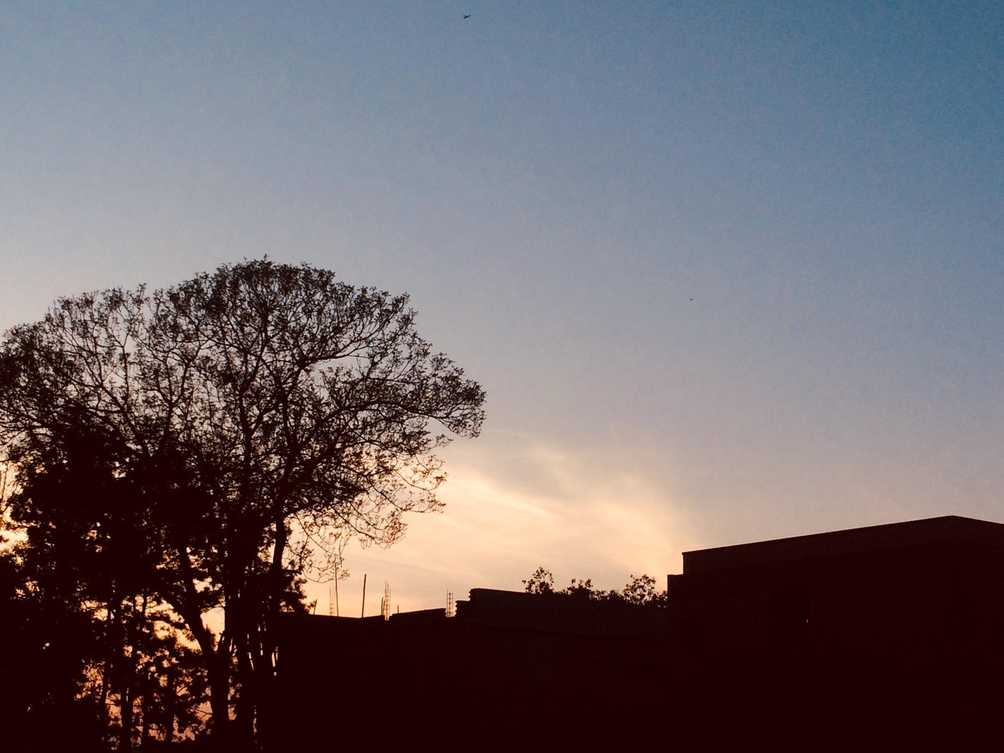 sunset  by maneeshmehra