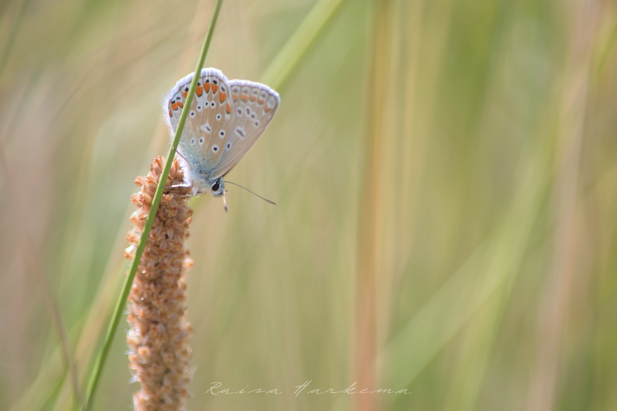 Small blue by Raisa Harkema