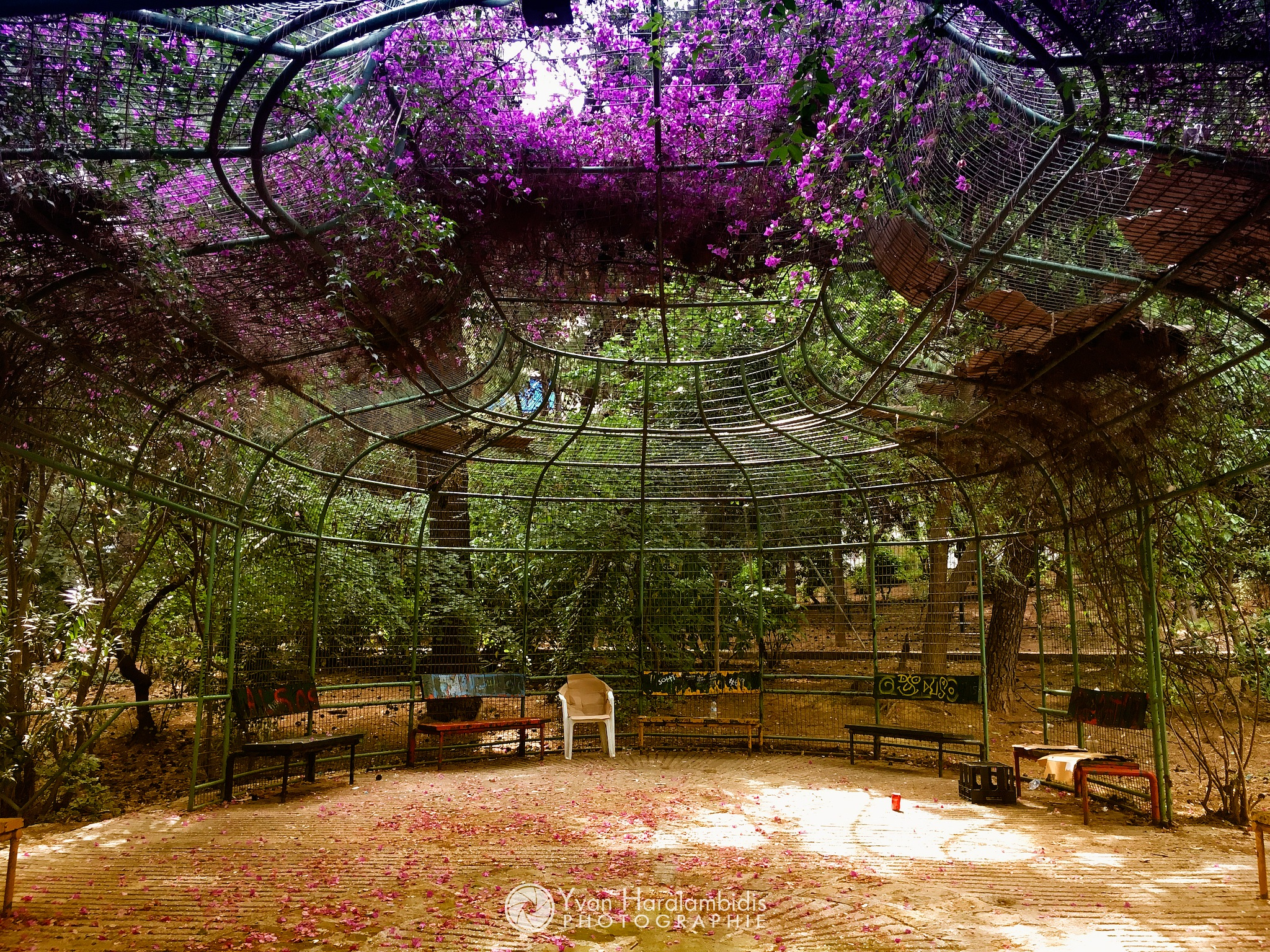 Détente à Athènes by Yvan Haralambidis