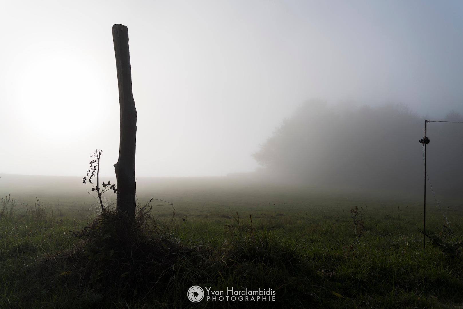 In the fog... by Yvan Haralambidis