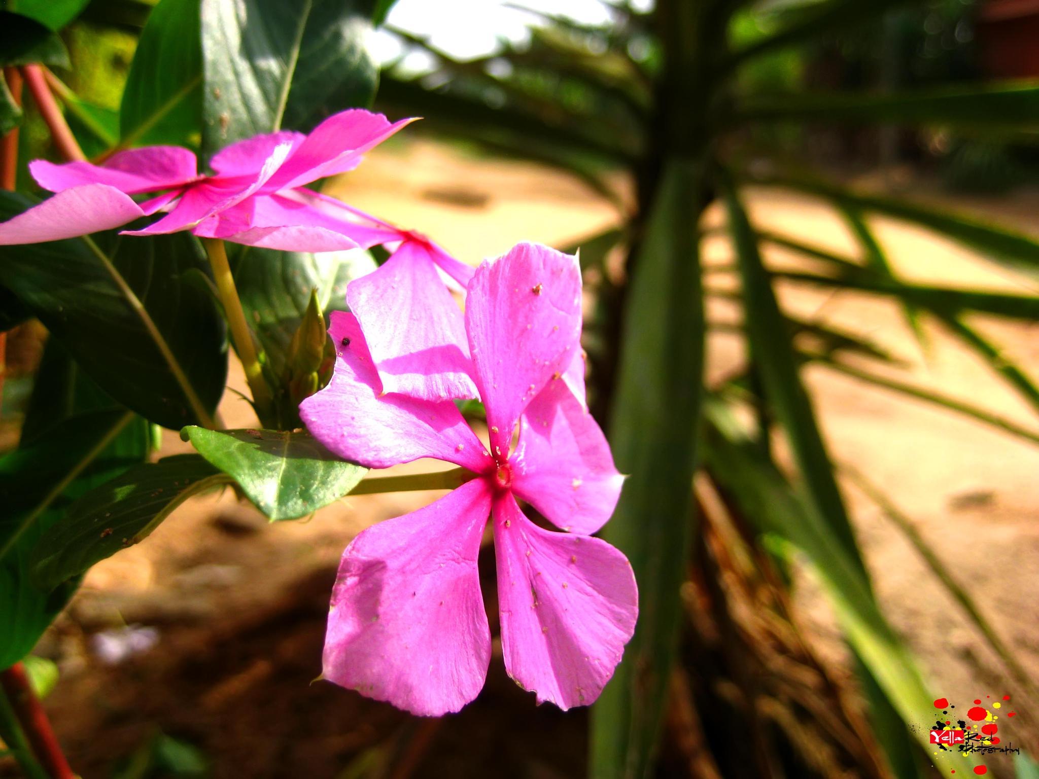 Flowers by Harrol Dogbo.