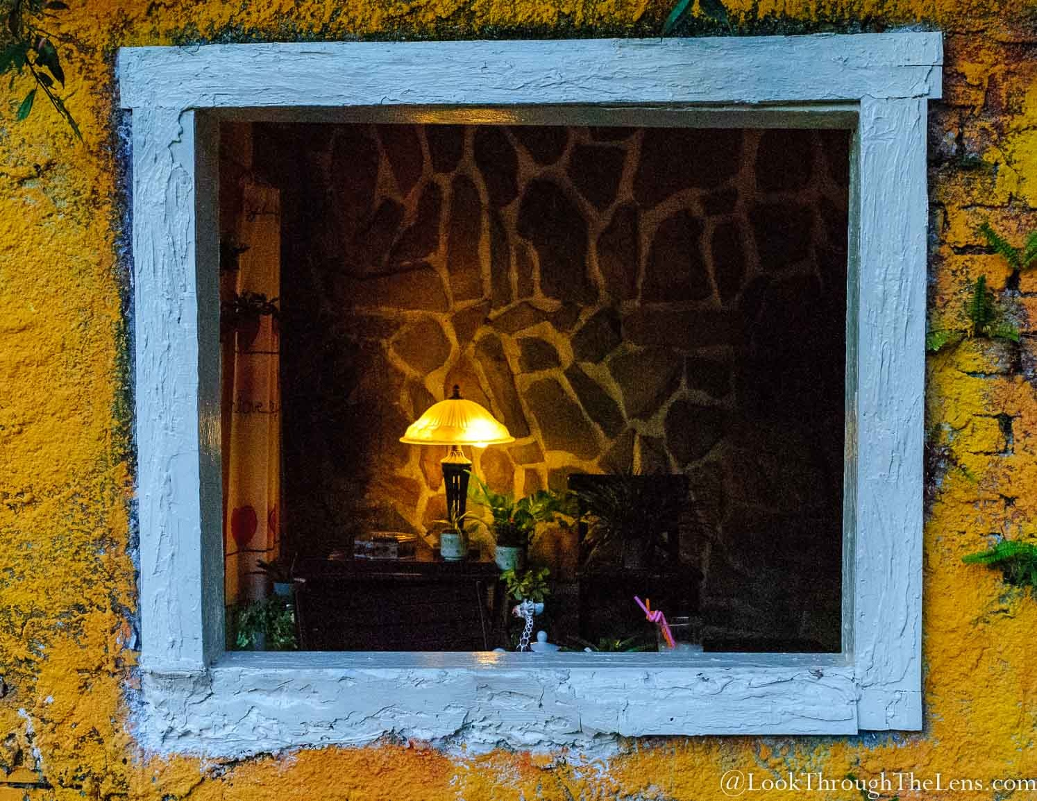 Flowers in a Window by Look Through The Lens