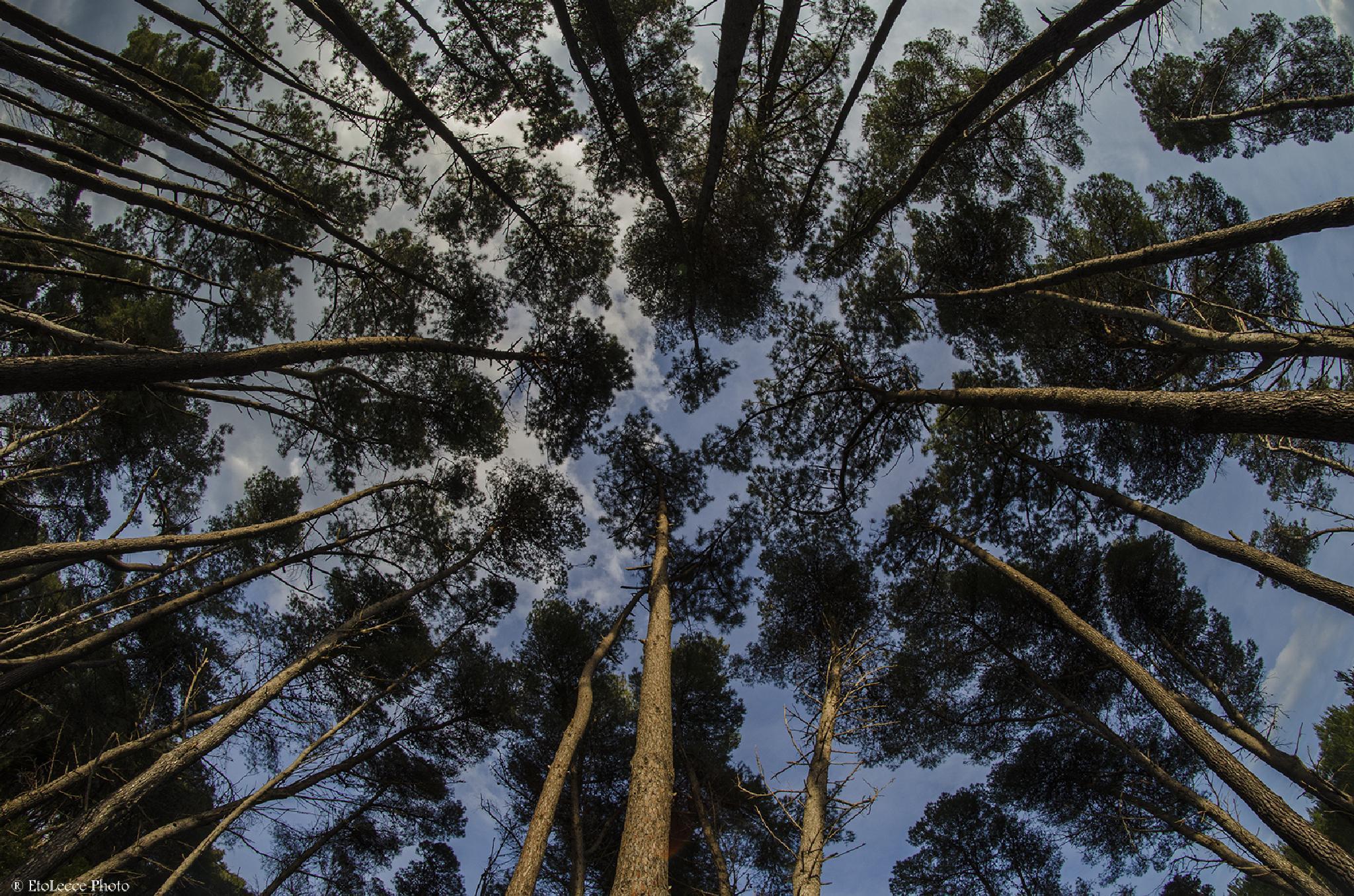 Il bosco by Amleto Lala