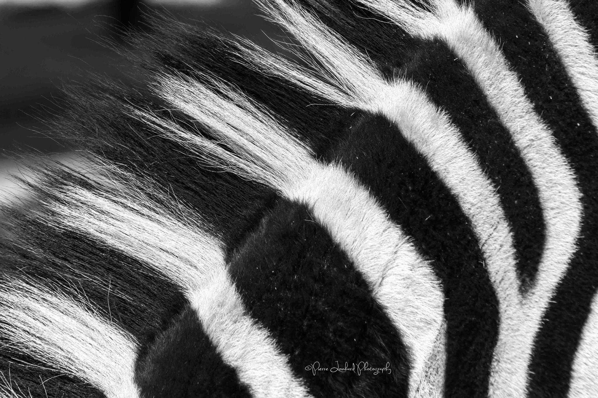 Stripes by Pierre Lombard