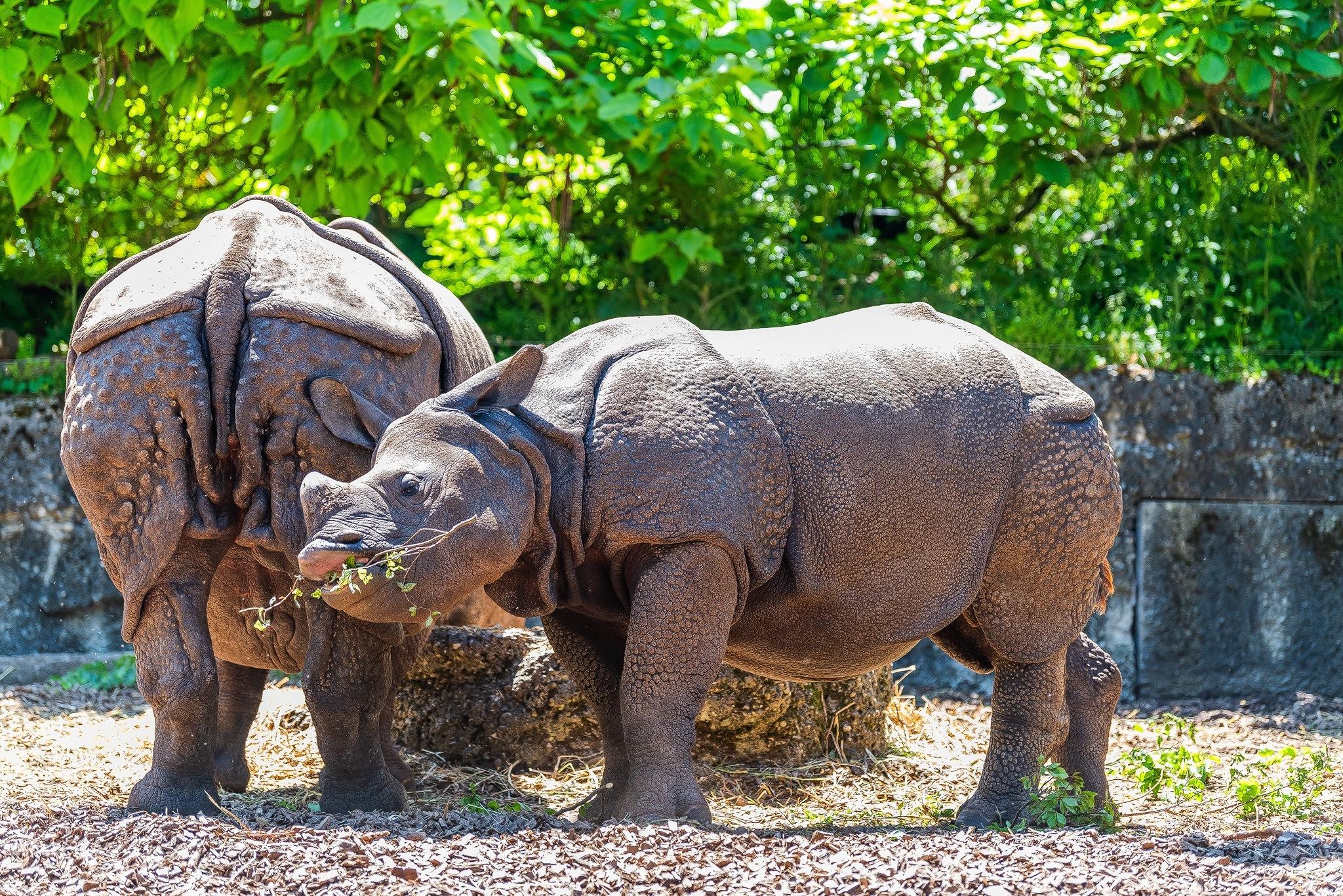 Rhinoceros by Fabian Bader