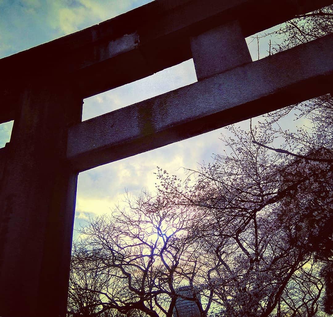 Tokyo Days 10: Sakura under the torii. by Ian Gazny Yaacob