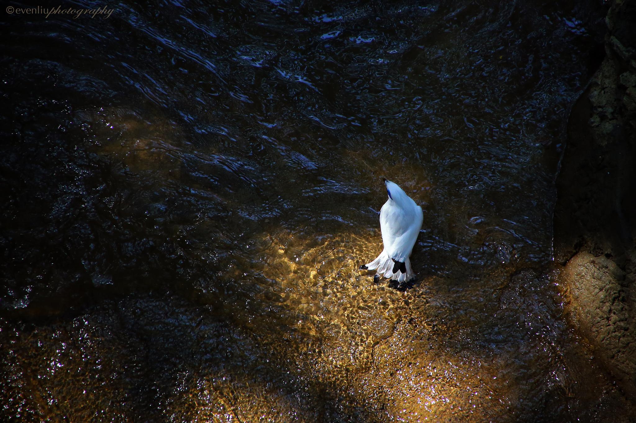 the bird by EvenLiu