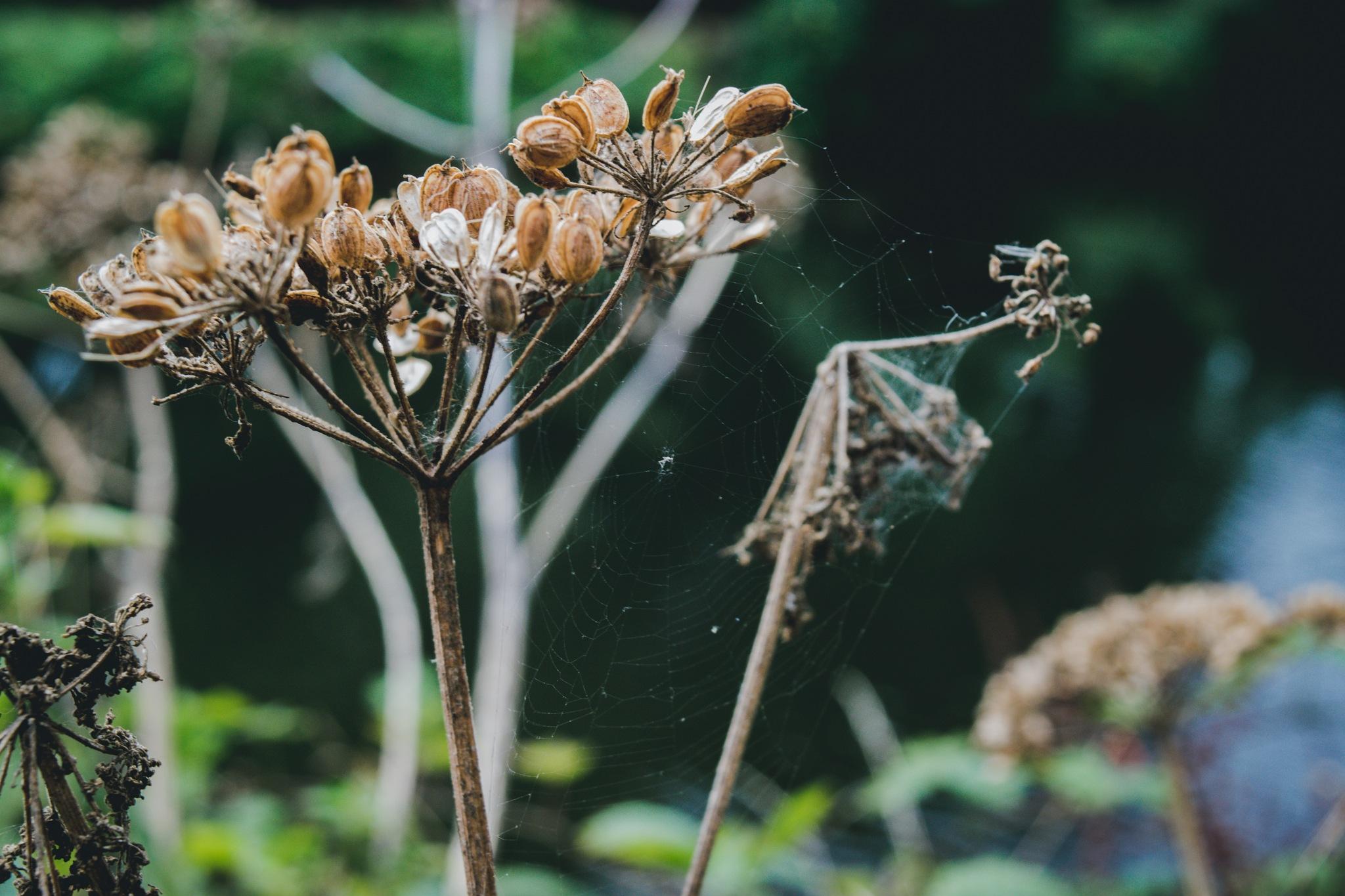 Fragile by Ashton Brook