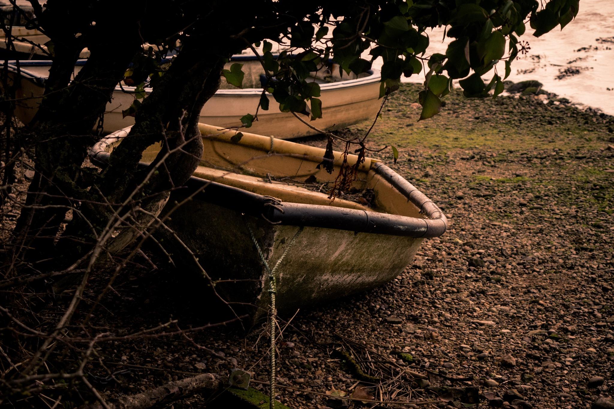 Forgotten Seas by Ashton Brook