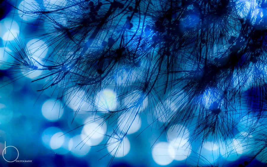Bokeh by Obscura Frame
