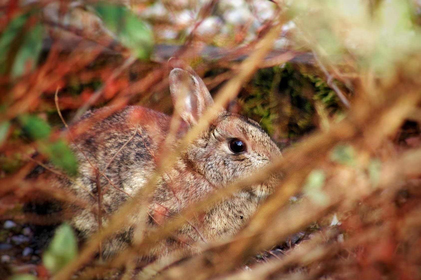 Hiding rabbit  by Callum Cavanagh