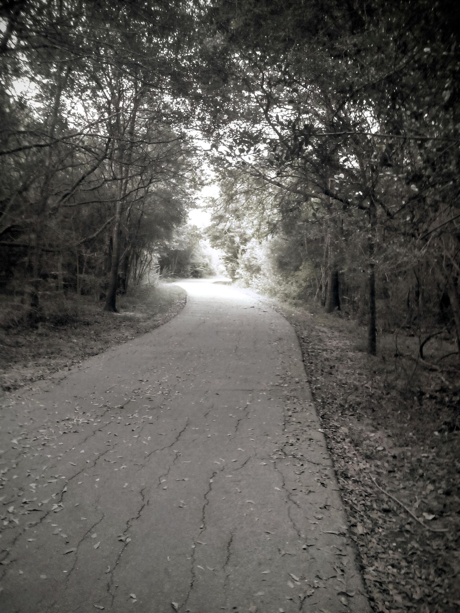 Cullen park walk trail.  by Yoshua Alexander