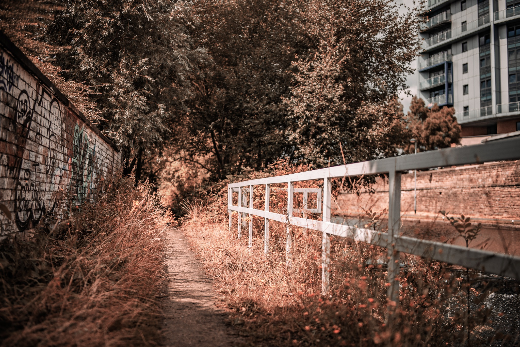 Urban Overgrowth by Kevin