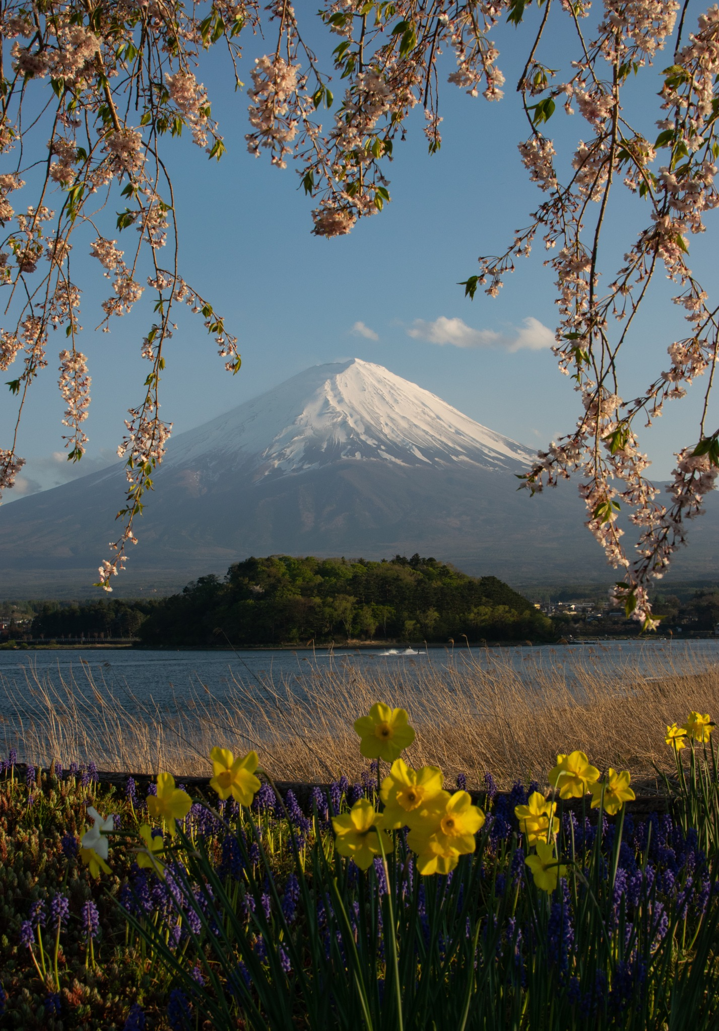 Mount Fuji and Flowers by Jose Miguel Moya Gonzalez
