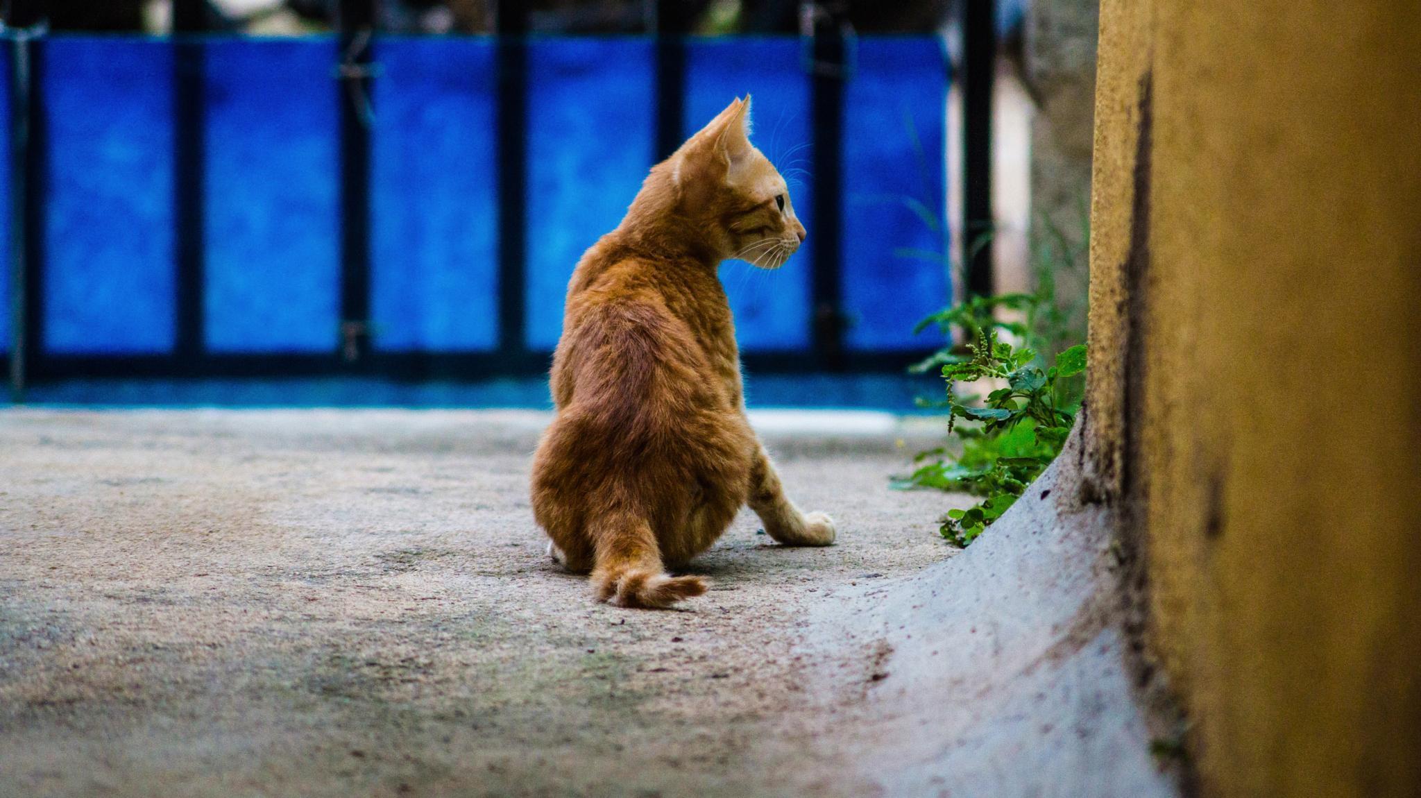 searching for prey  by rkramtej