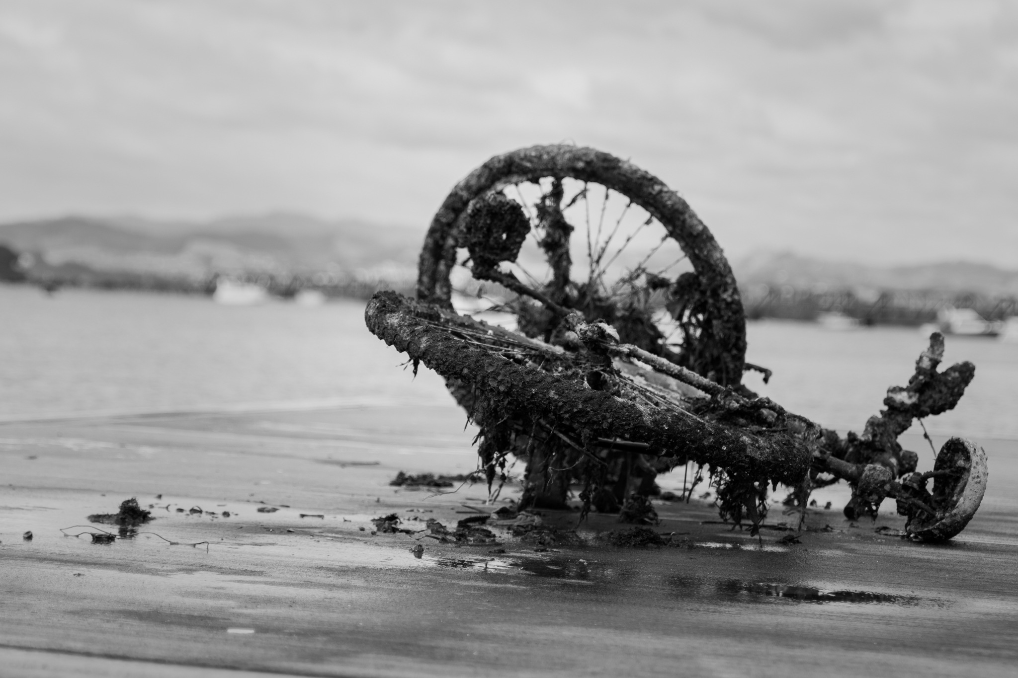 Untitled by Ilona Lace-Storey