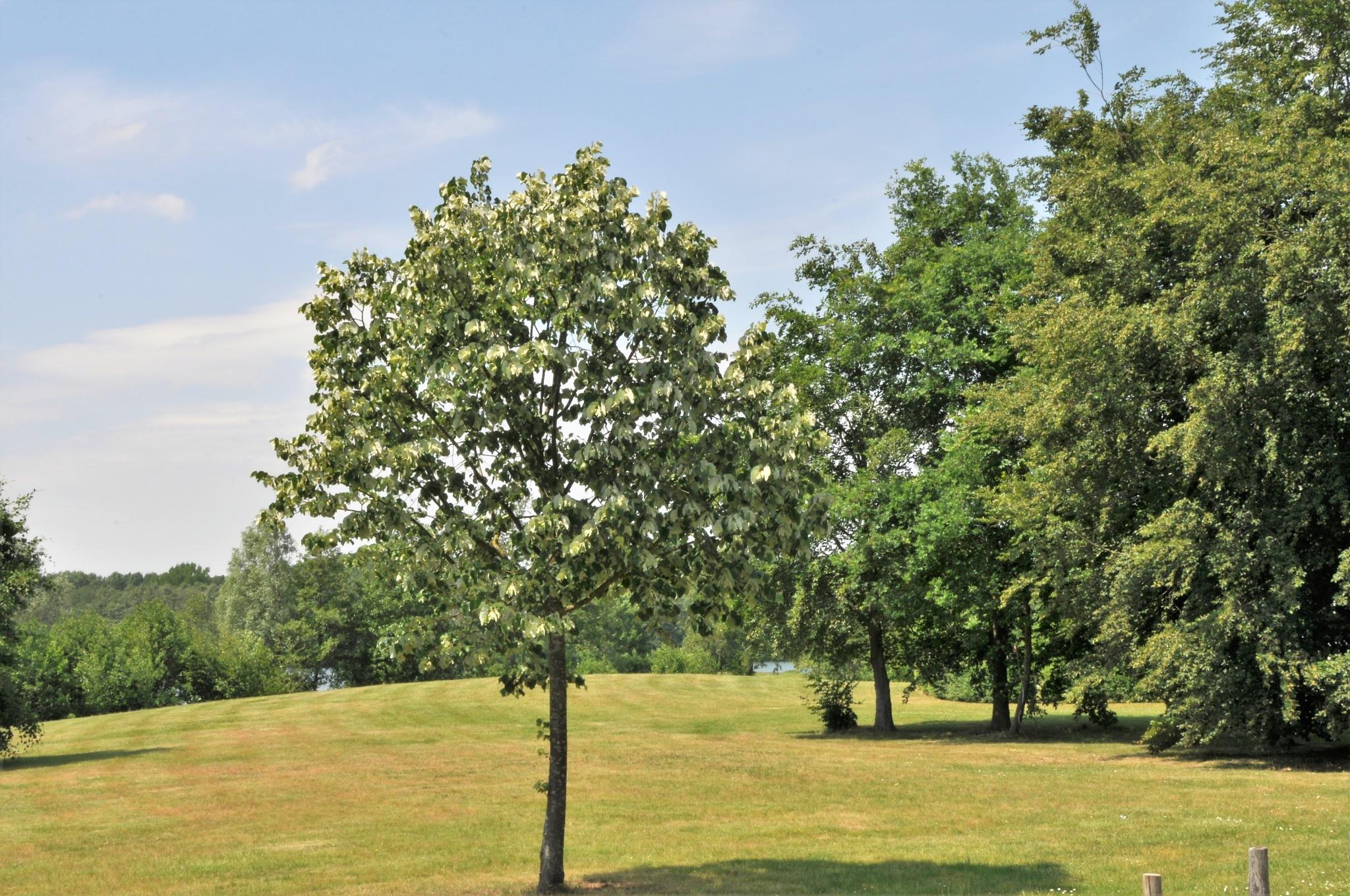 Millennium Golf Court, Paal, Limburg, Belgium by Rosario Di Rubbo