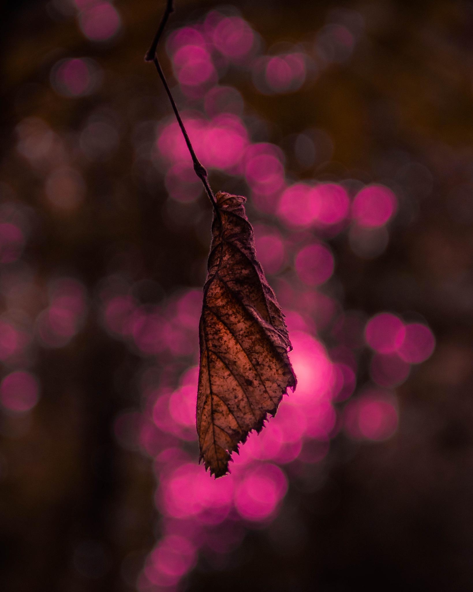Falling by HerleenSethi