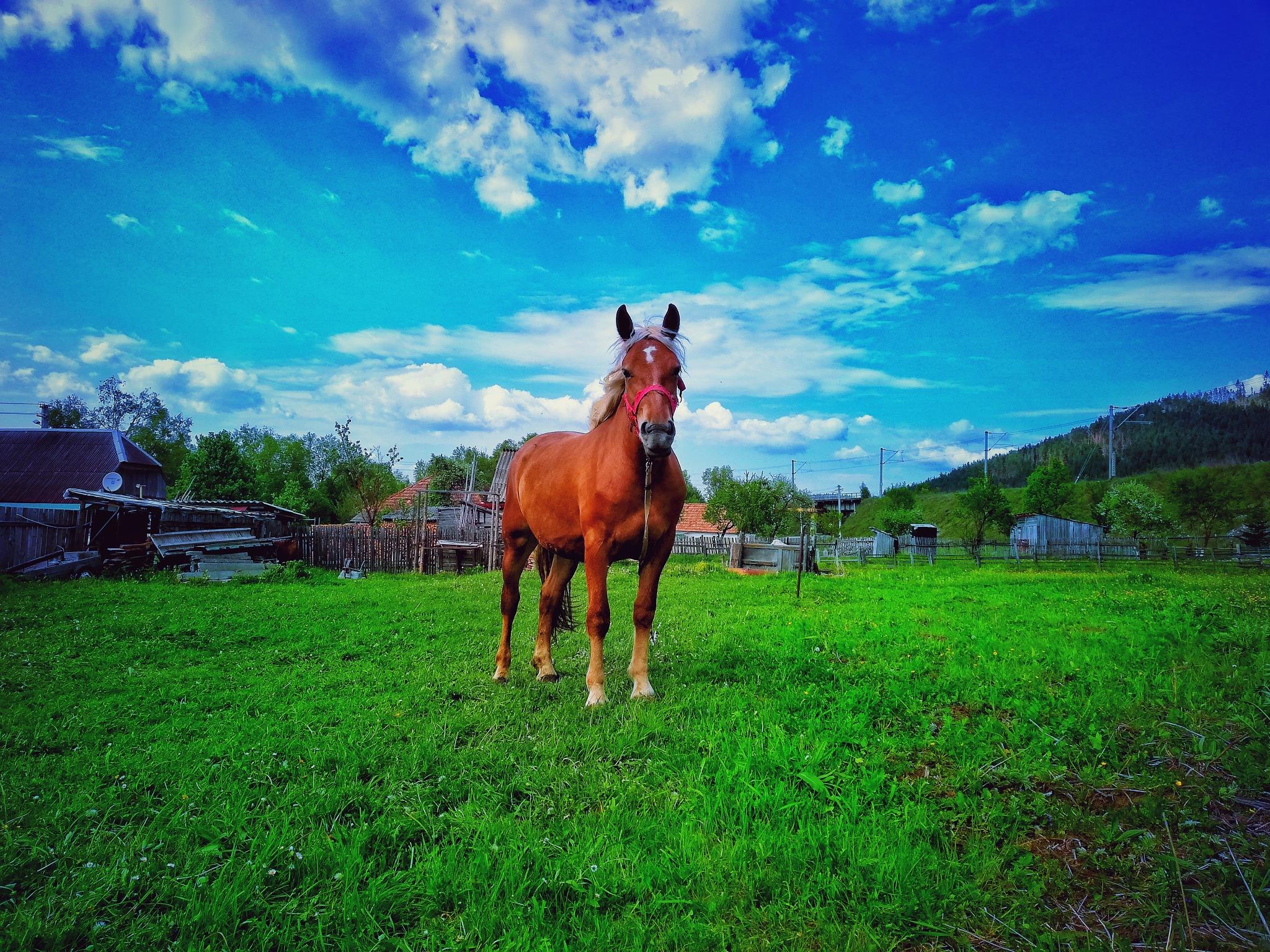 horse  by Lacatus Petru-Claudiu
