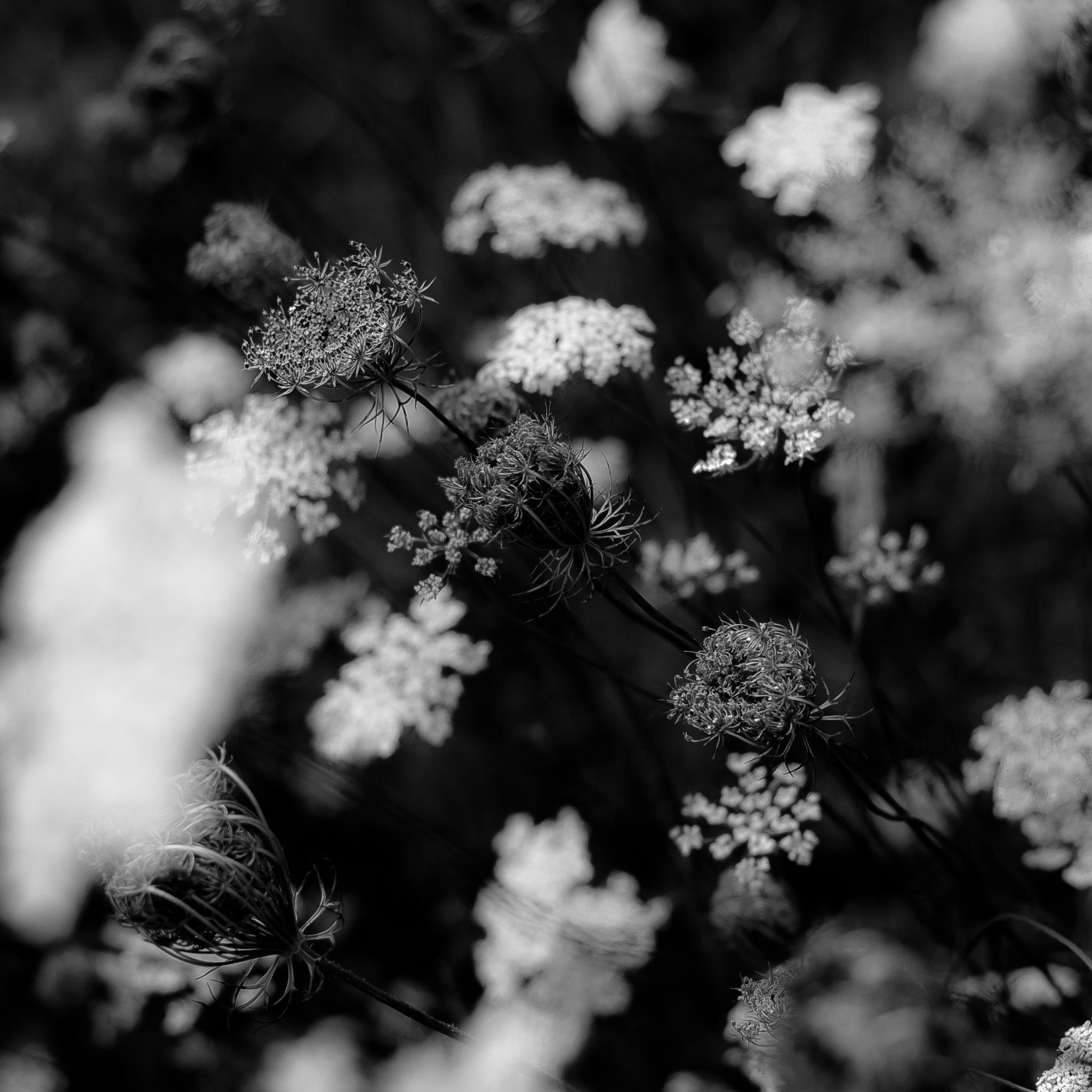 Summer Wildflowers 050 by Noah Weiner