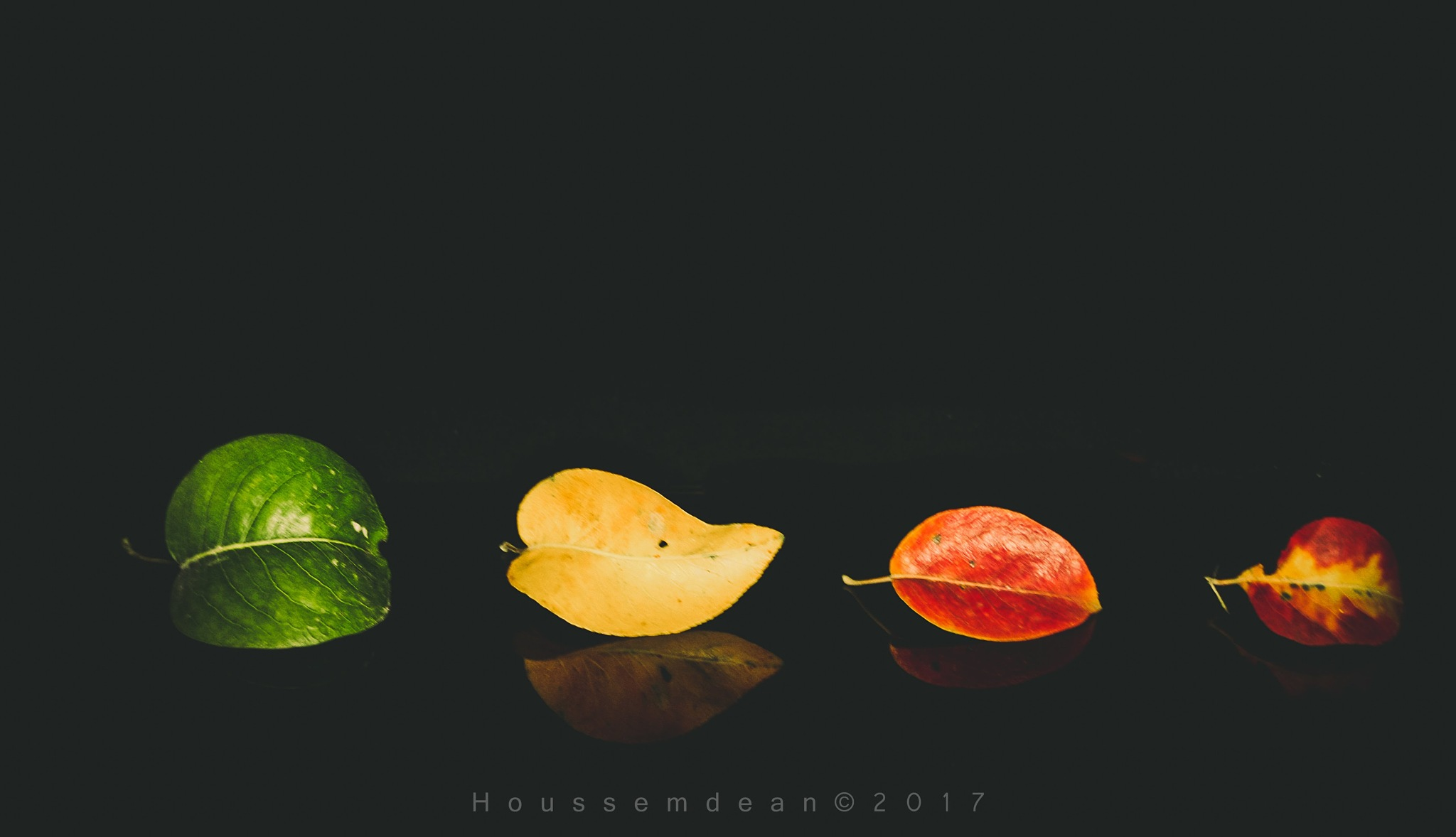 L automne  by houcemdean