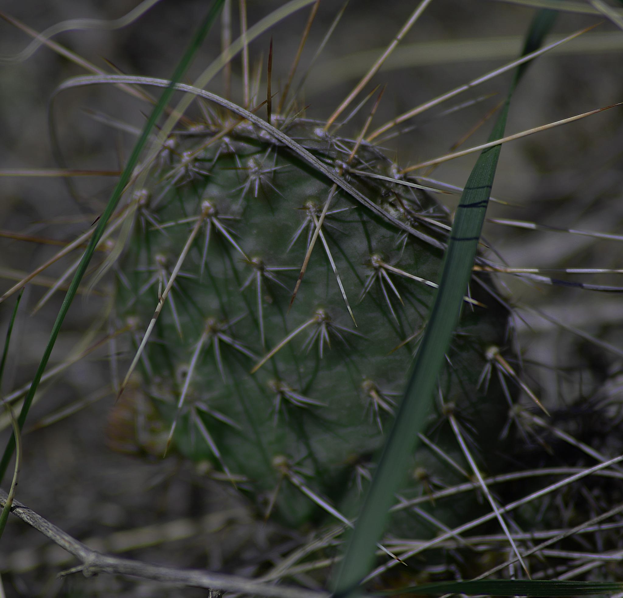Cactus by Dan Archer
