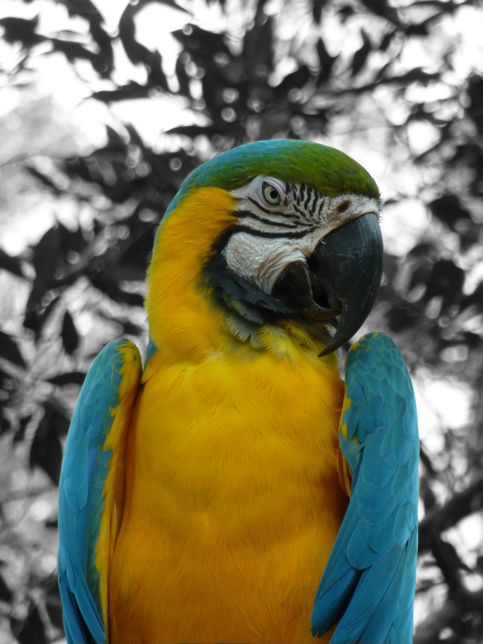 Parrot by paddyeatworld